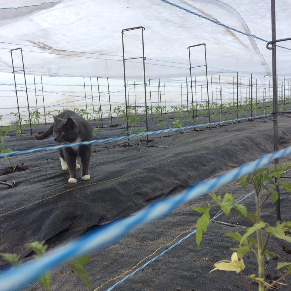 tomato babies in their nursery