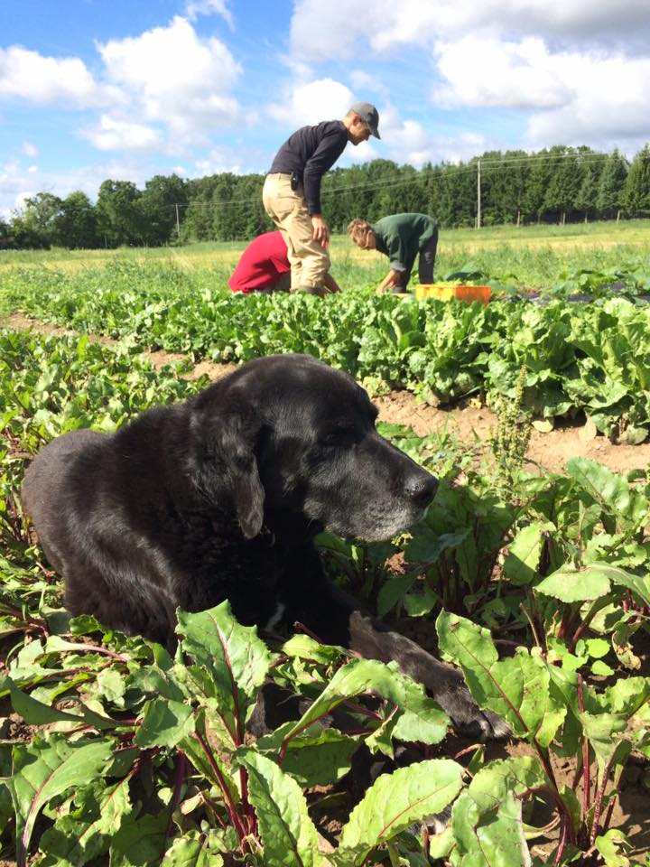 Buster in the beets