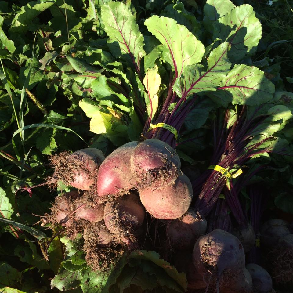 """""""Breathe properly. Stay curious. And eat your beets."""" Tom Robbins"""