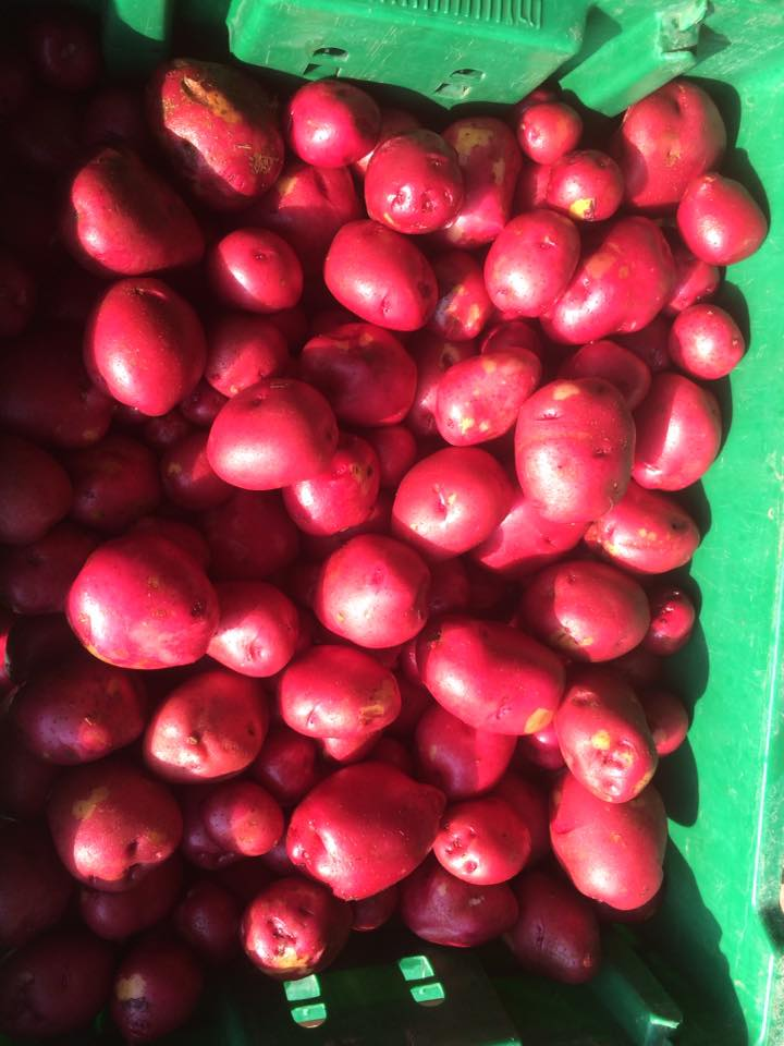 Beautiful Red Potato gems