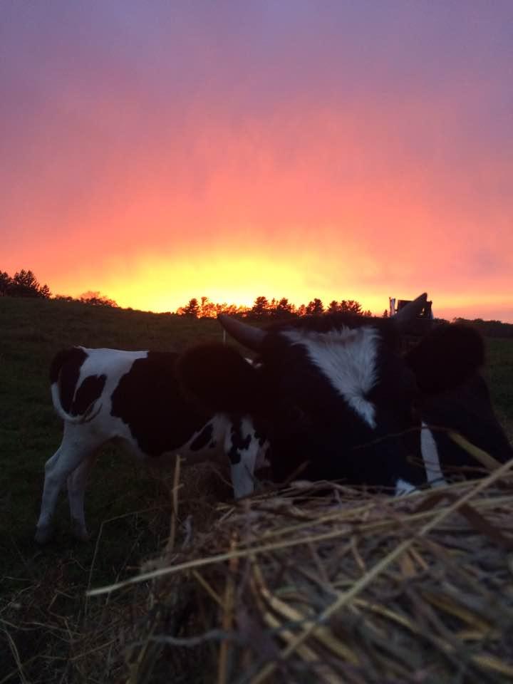 Sunset hay buffet