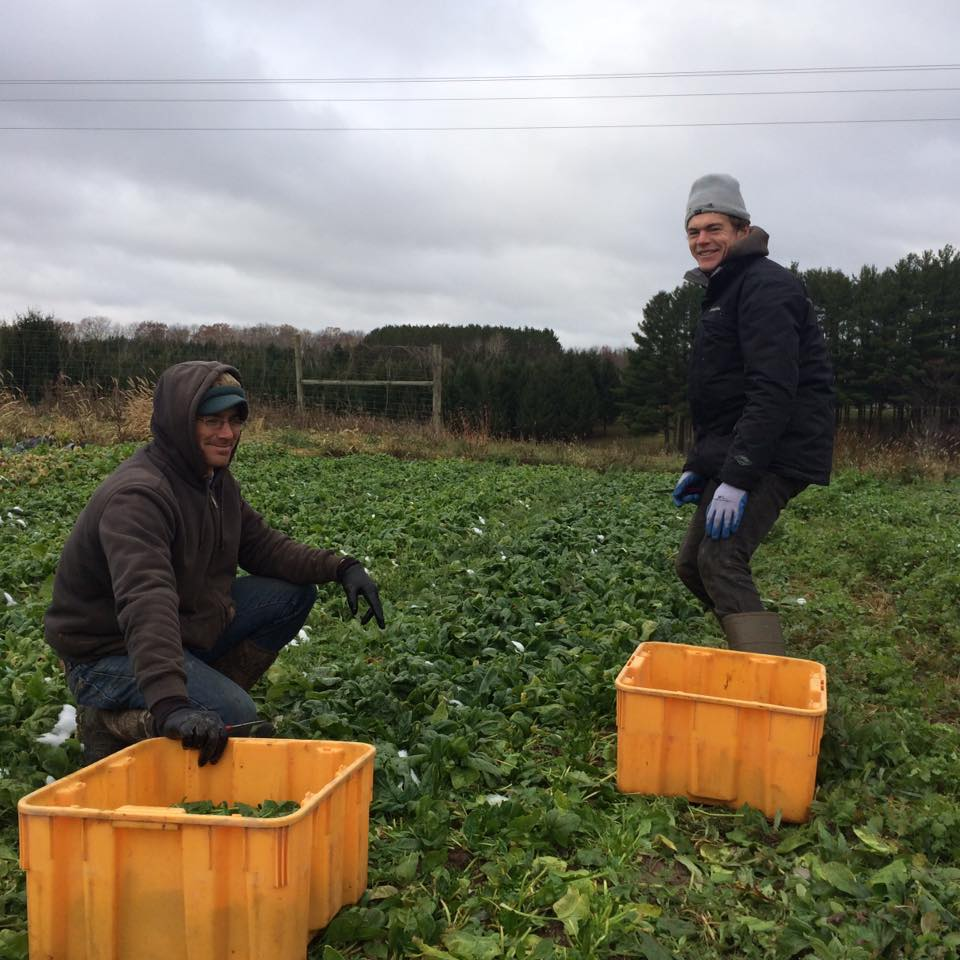 Josh and Andrew braving the cold to bring you the most delicious spinach ever!