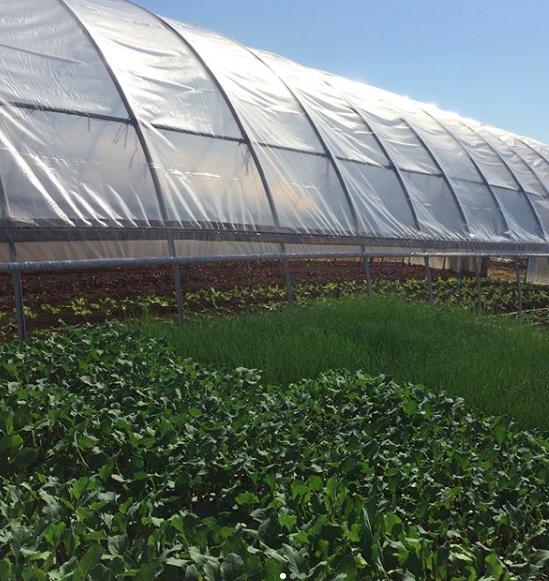 greenhouse goodness