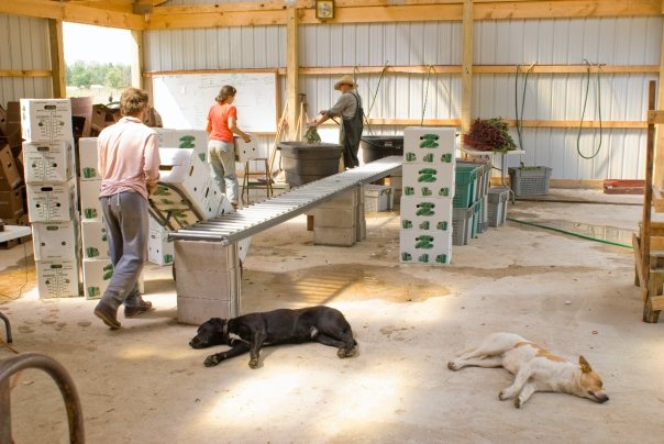 2009 in New Auburn in the pack shed.  Season 1 of Turnip Rock Farm