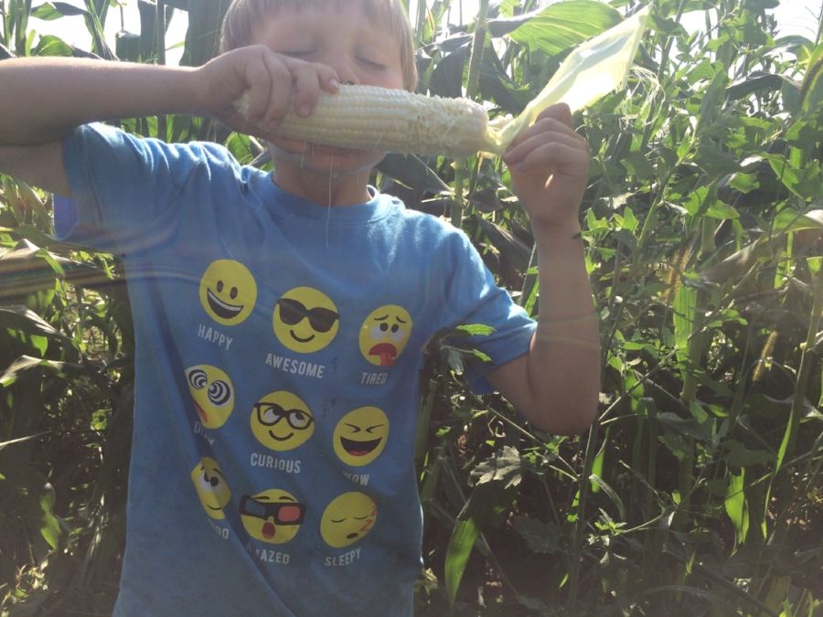 Sweet corn giving us emotions