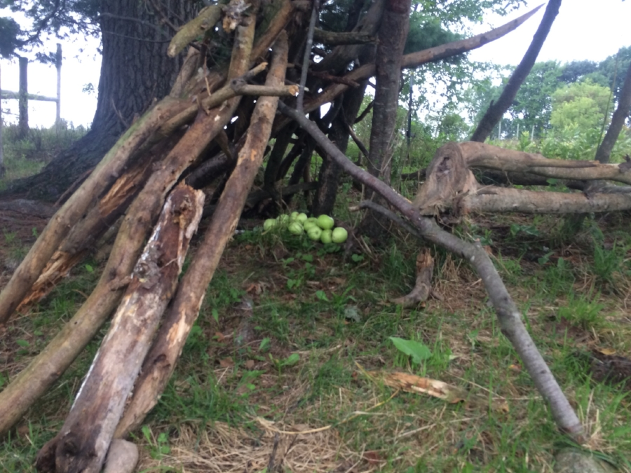 Otto's stick fort and some wild apples