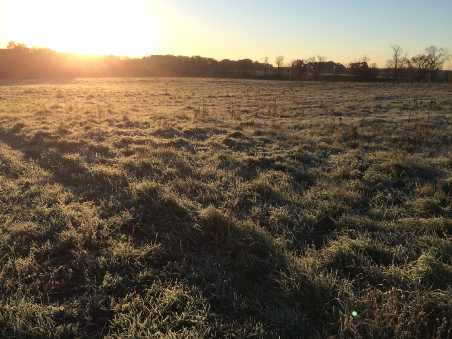 frost sweetened grass