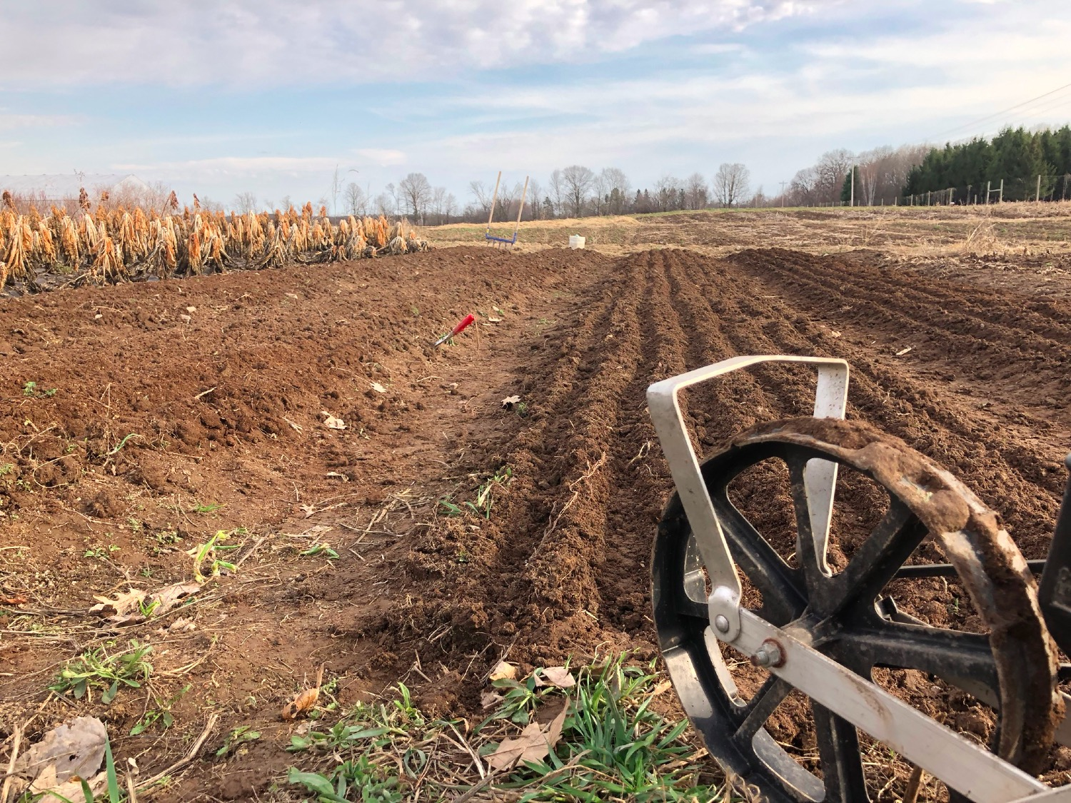 Spinach seeding time