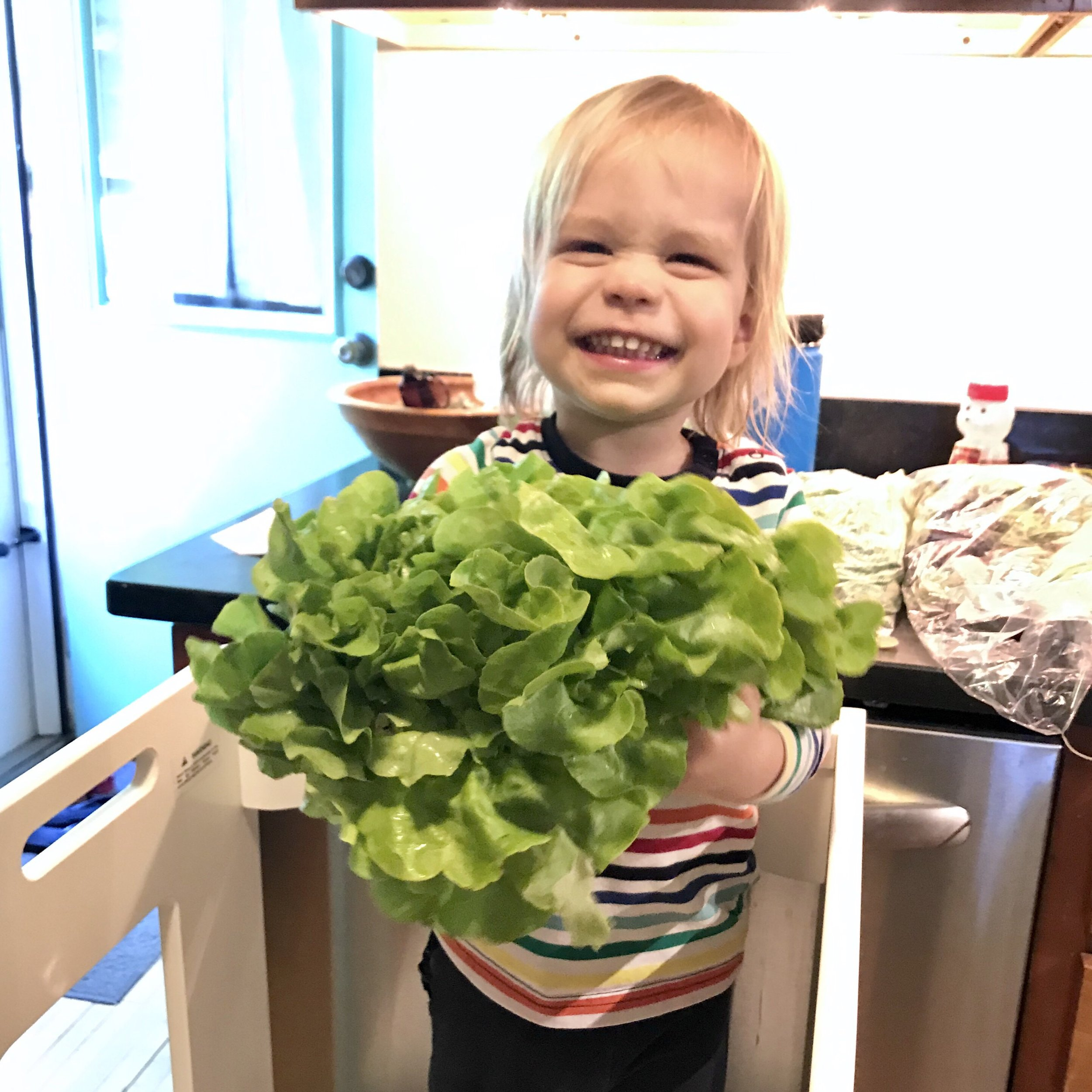 A CSA member who is feeling happy about this wonderful lettuce.  Happy salad eating, everyone!
