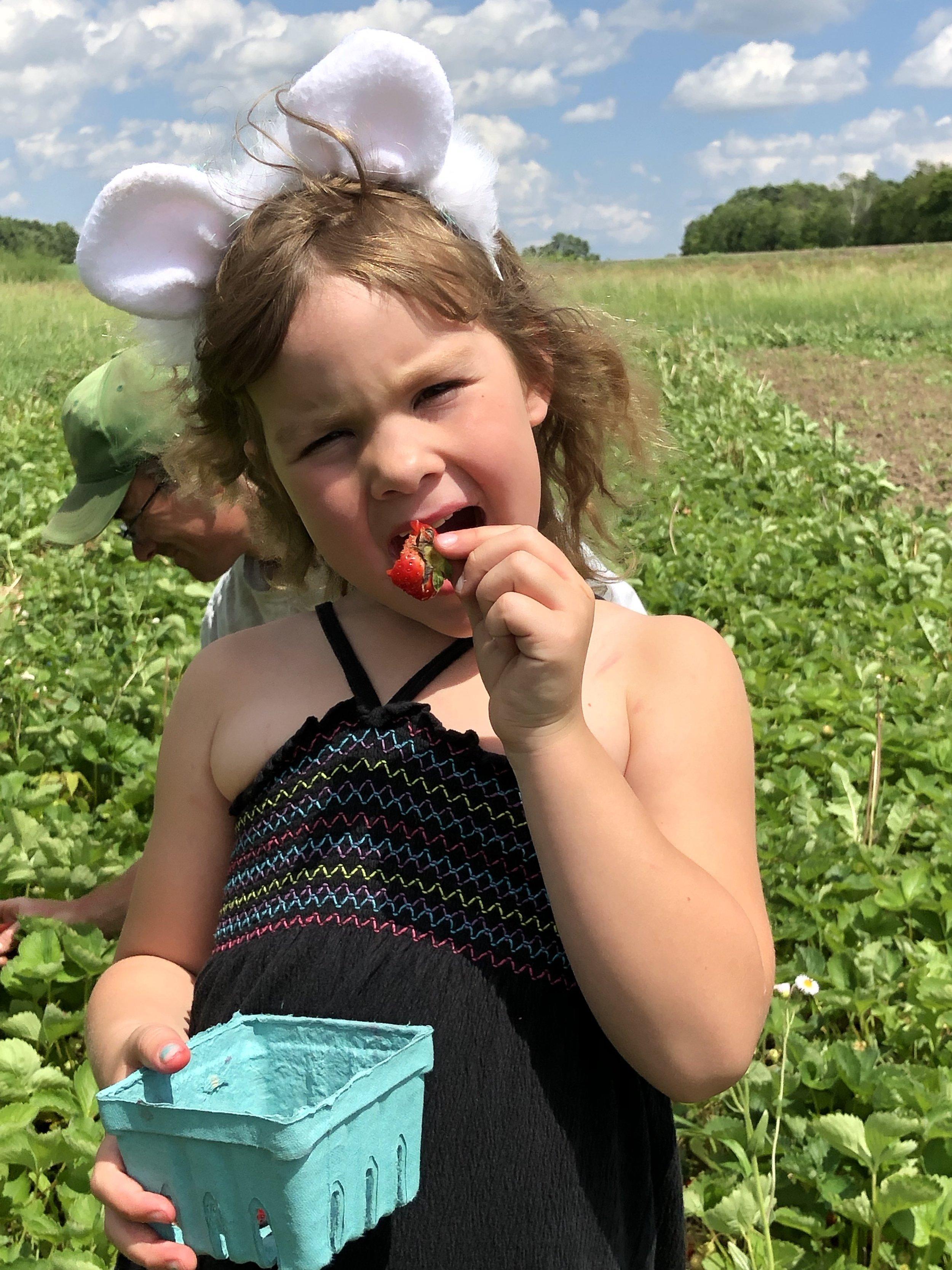 Sadie loving berry picking