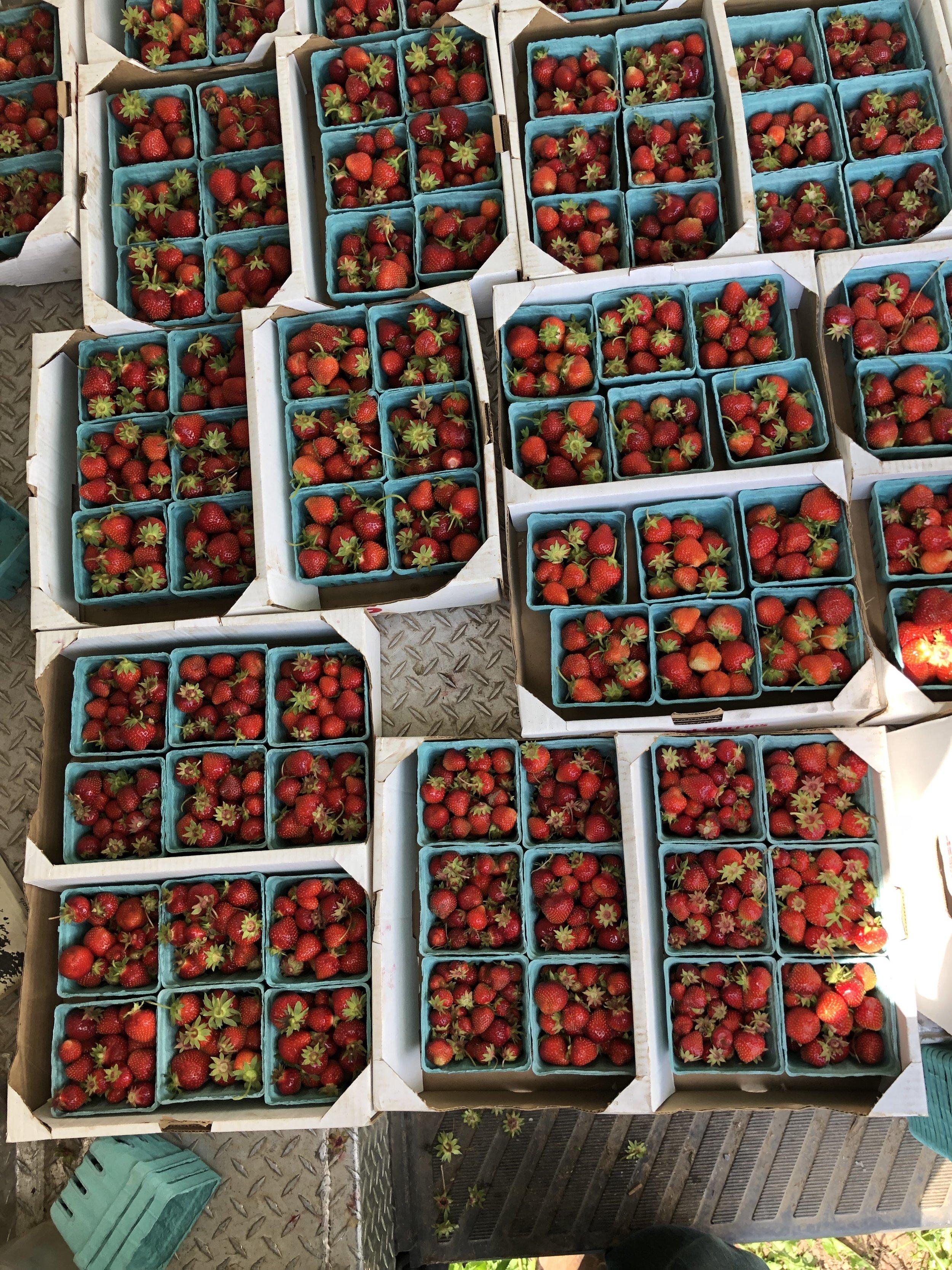 beautiful berry bounty