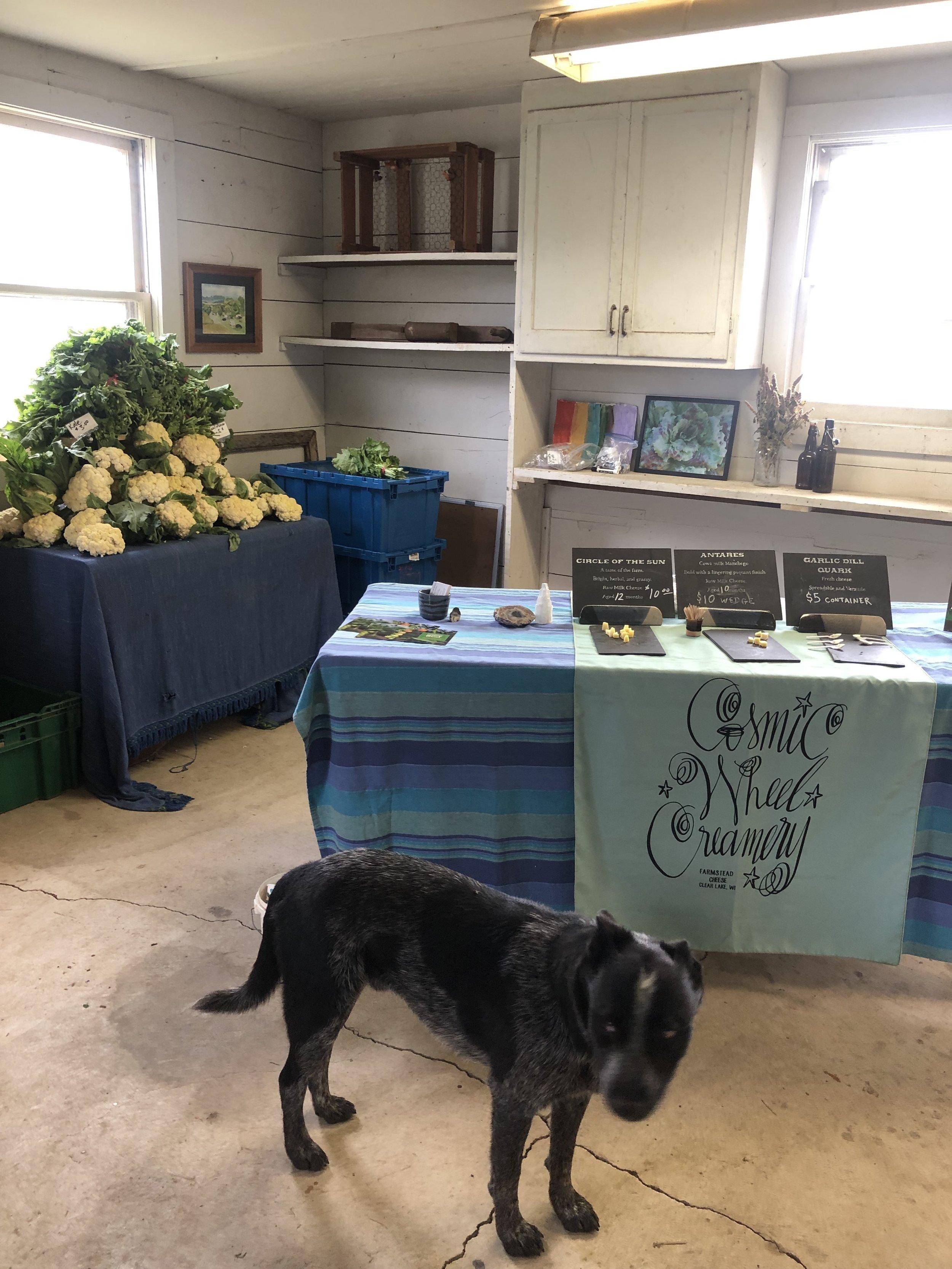 Jasper inviting himself on the farm tour