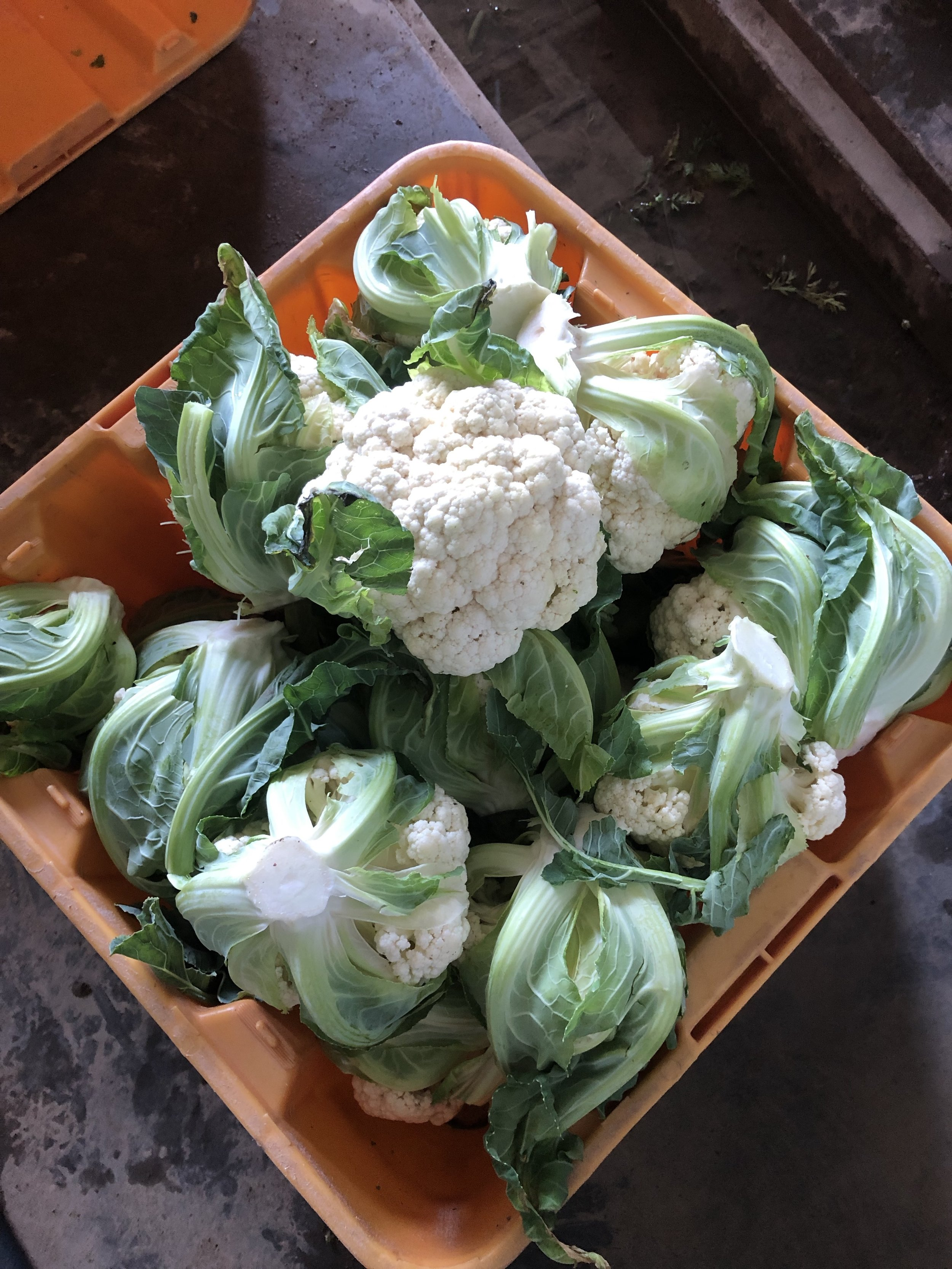 welcome to the box, Cauliflower!