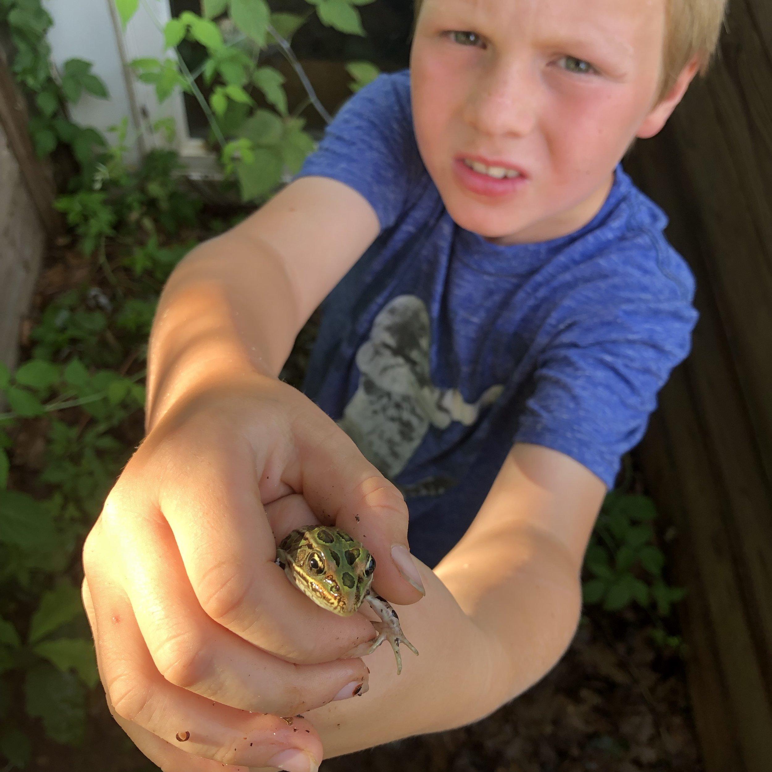 otto really appreciates frogs