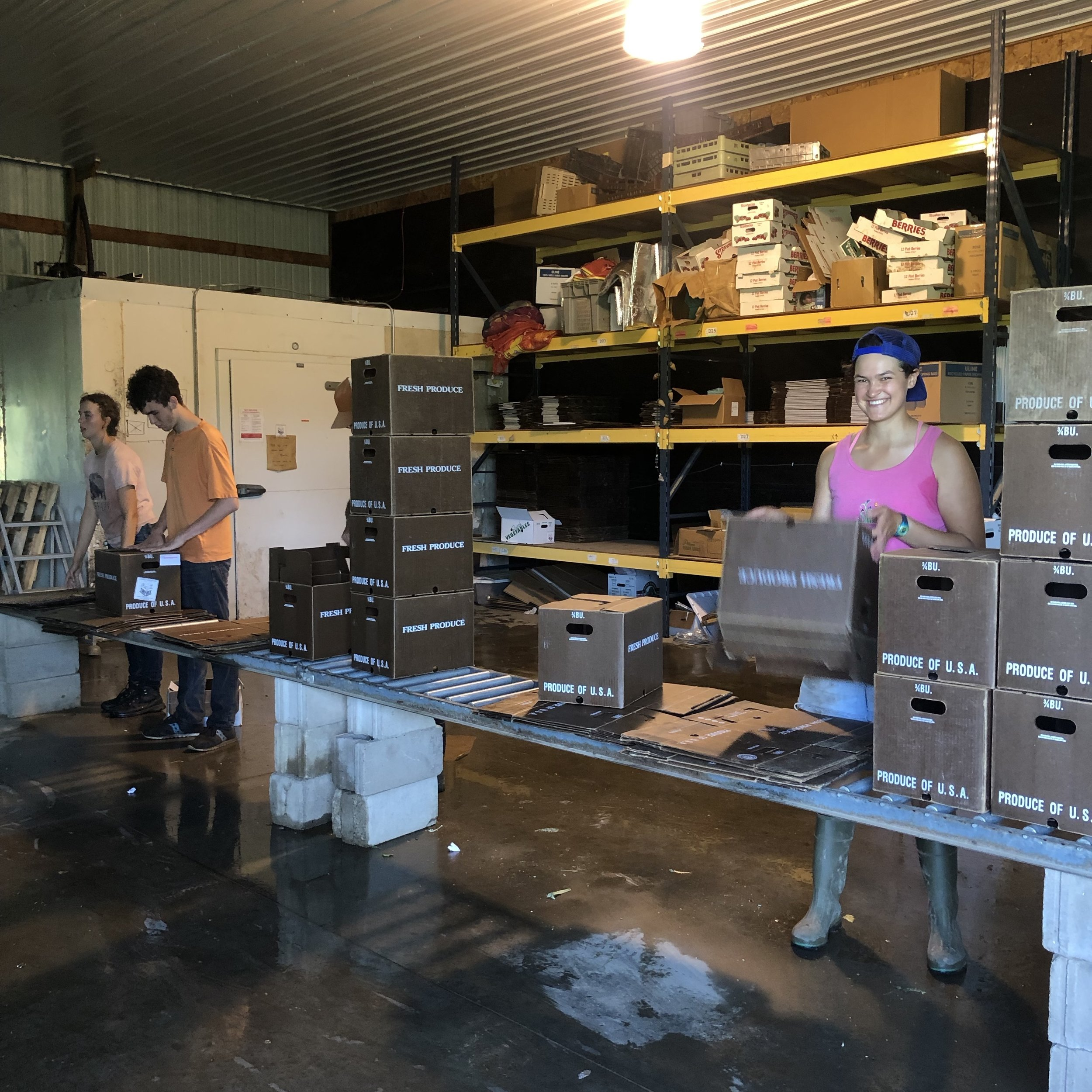 getting ready to pack some CSA boxes!