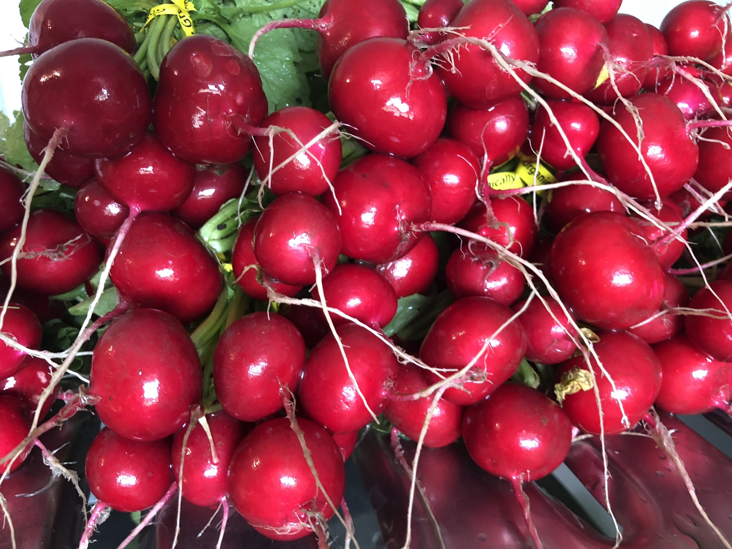 can't get over how pretty the radishes are