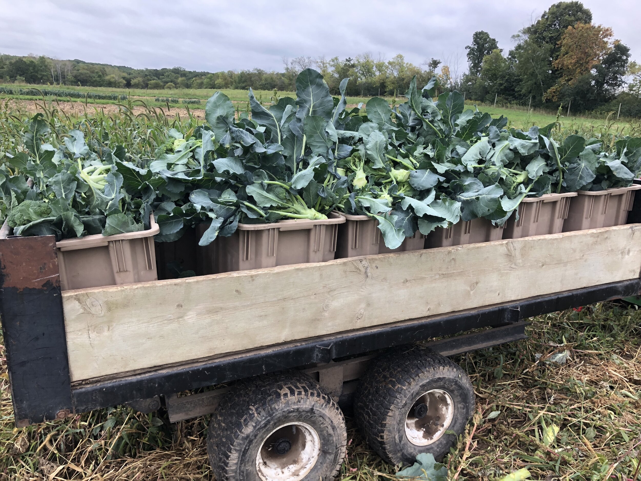 broccoli coming your way!