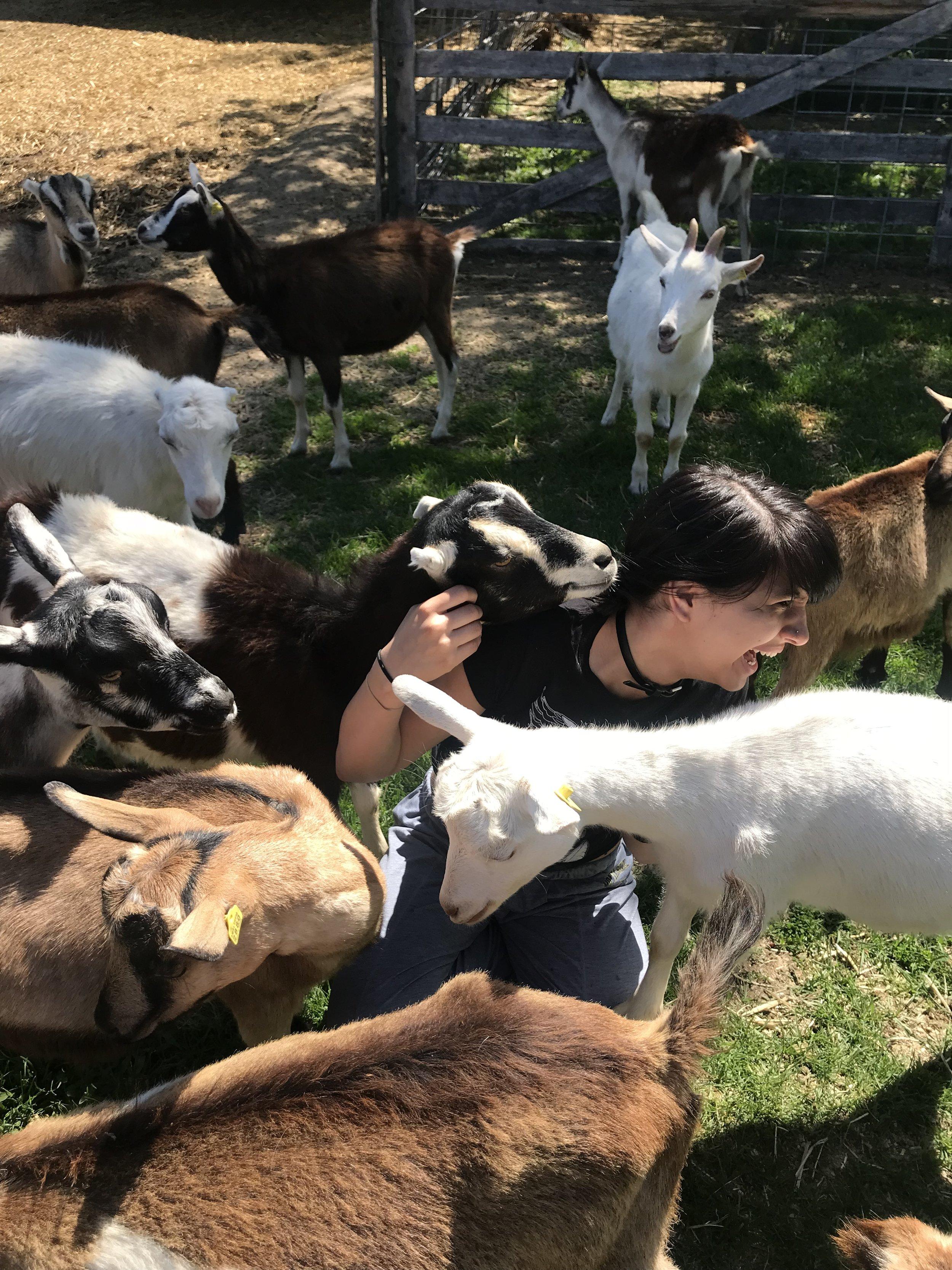Senior participant Savannah making many new friends at Amalthea Farms.