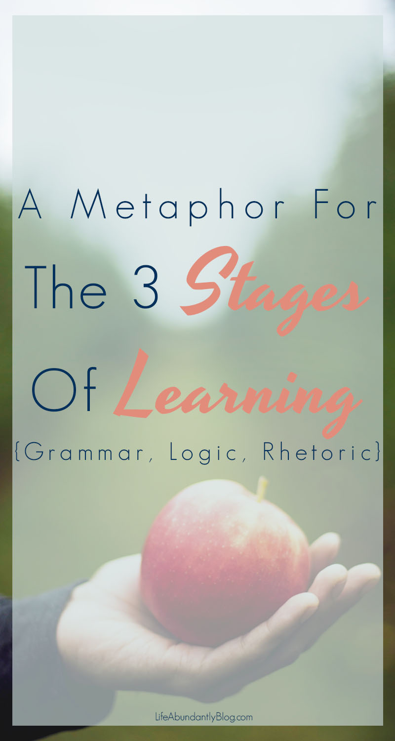 Confused about what the 3 stages of Classical Education are and how they work together? This is a super-simplified metaphor put together by my little brain. I hope it helps clarify the transition from grammar to logic/dialectic to rhetoric!