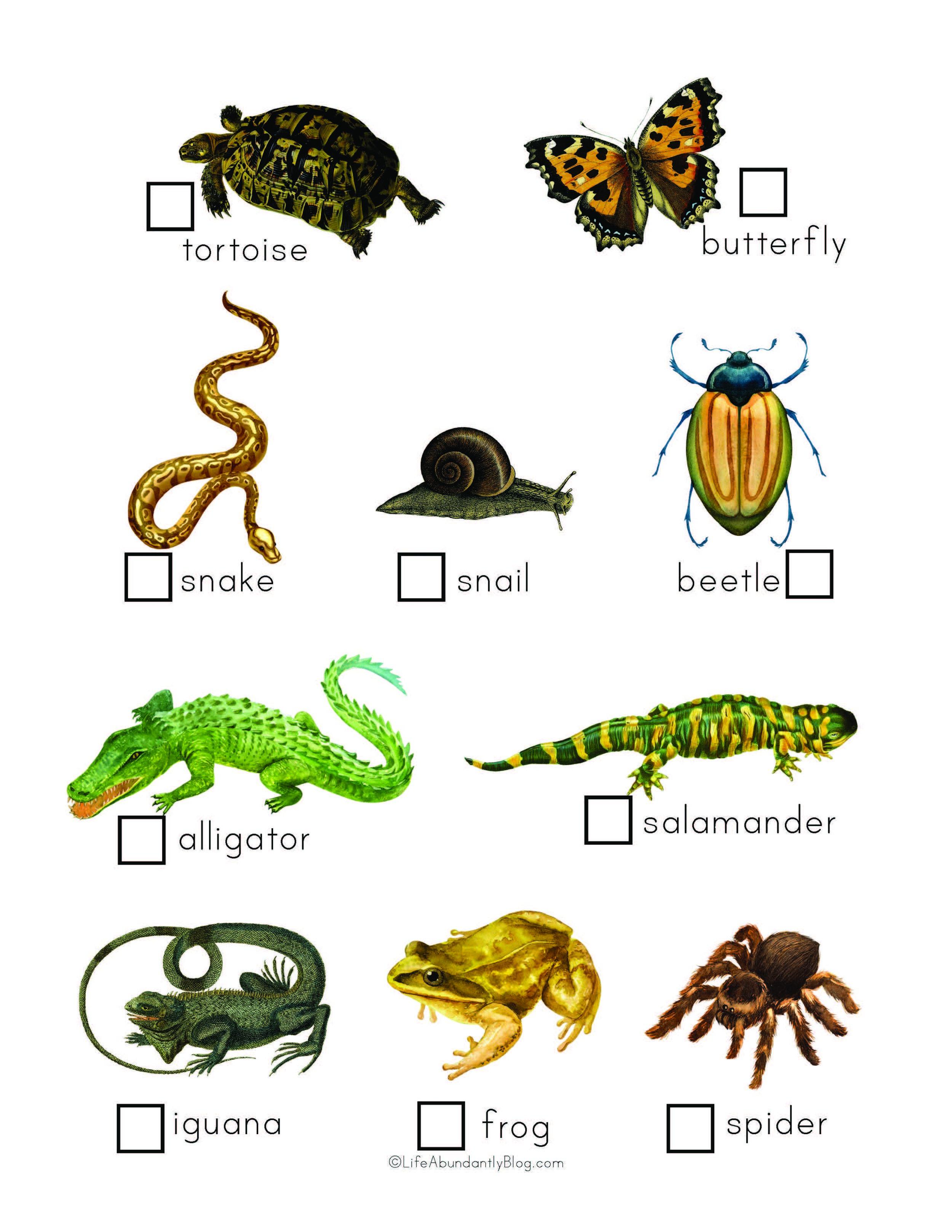 Zoo Explorers Pack_Final_Page_6.jpg