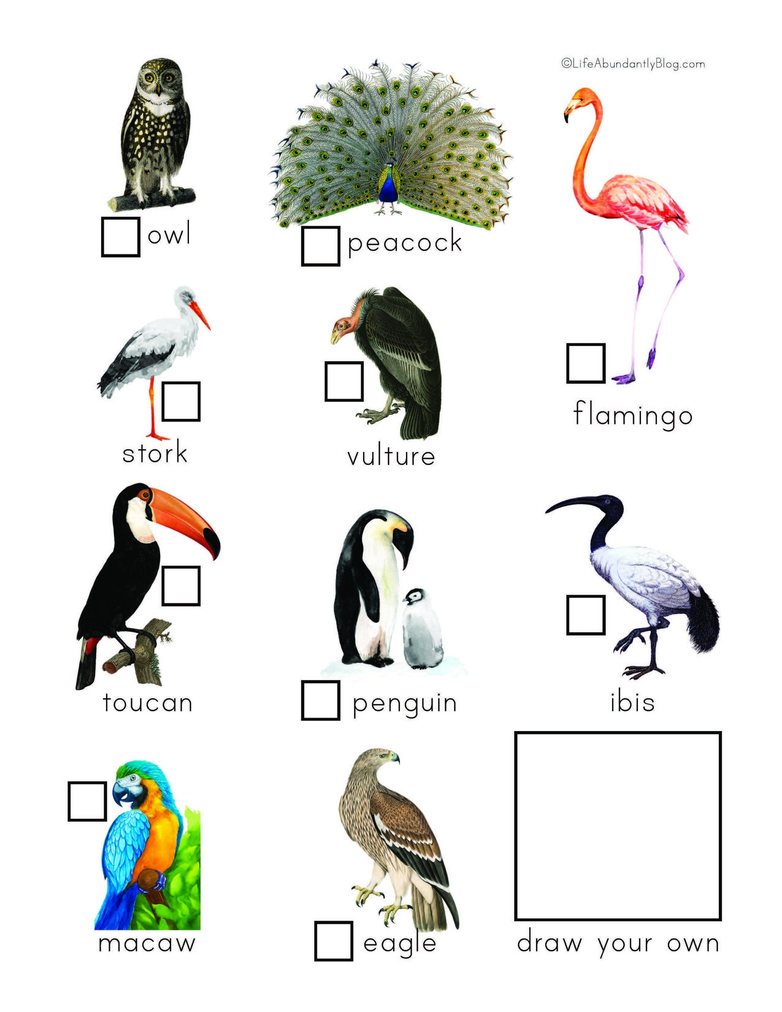 Zoo Explorers Pack_Final_Page_5.jpg