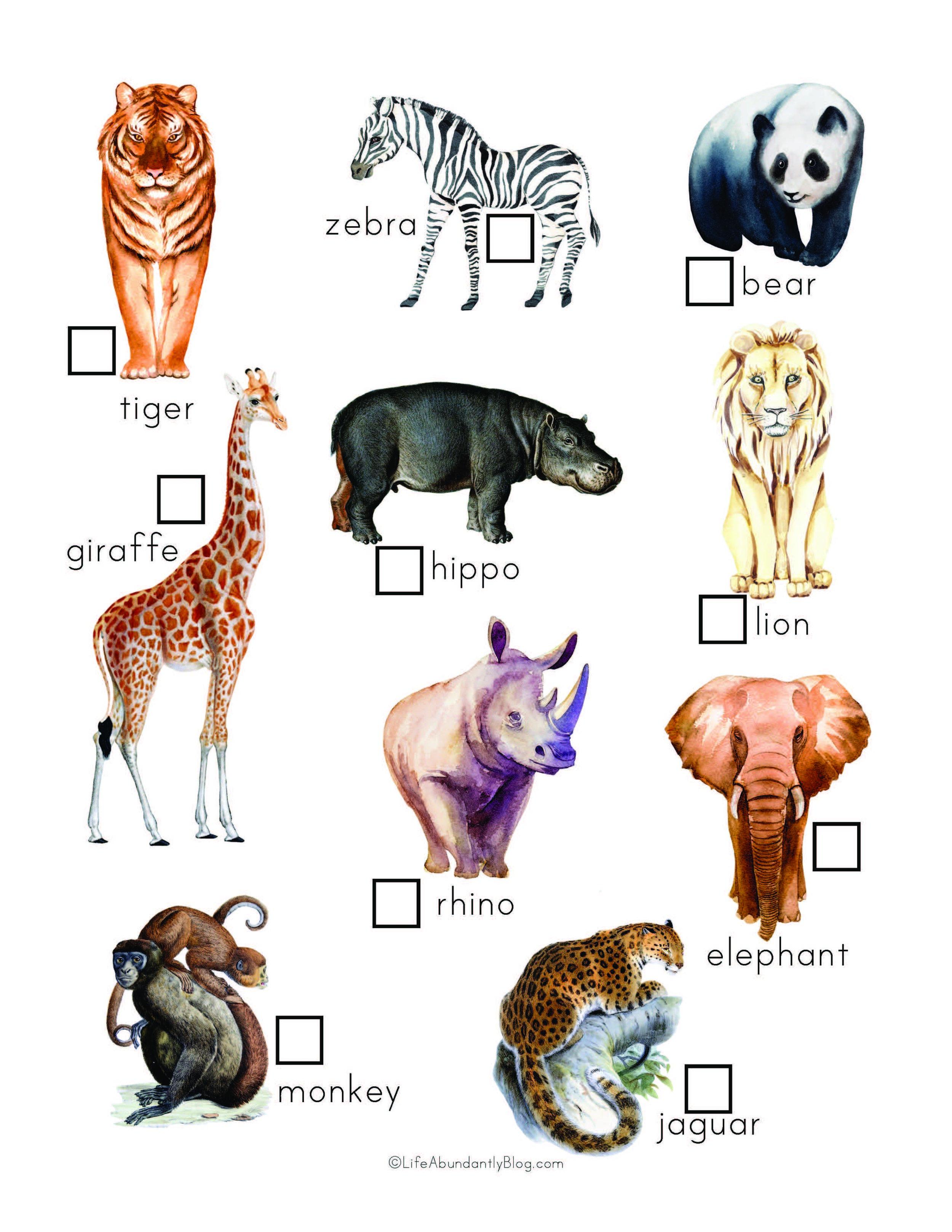 Zoo Explorers Pack_Final_Page_4.jpg