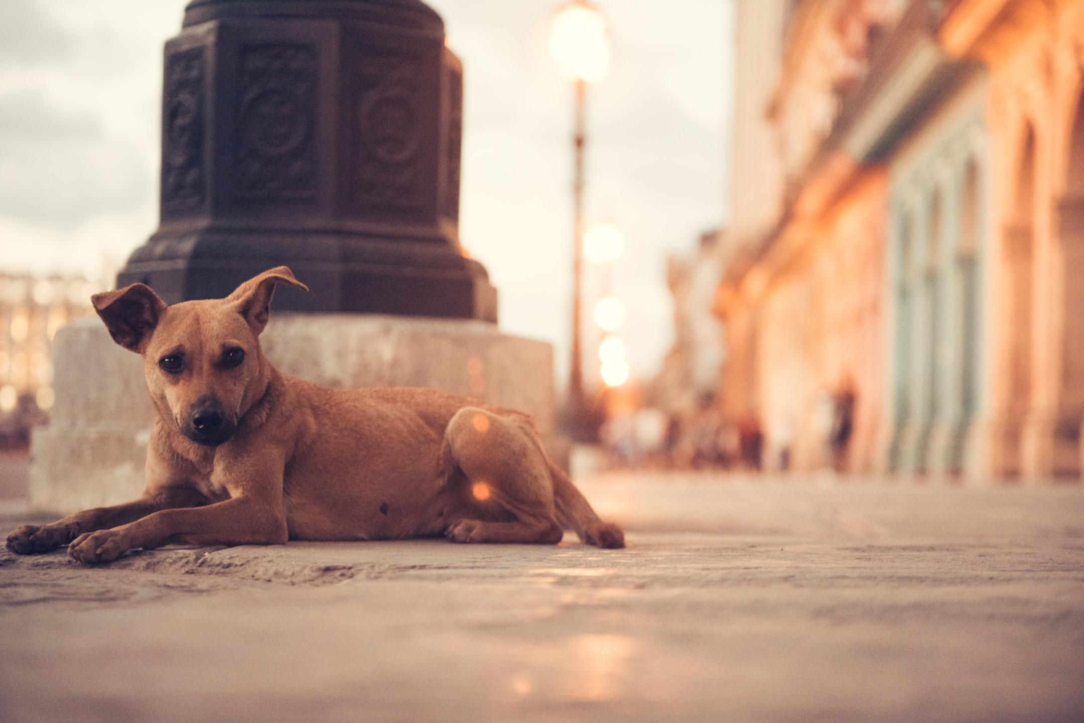 Elliott O'Donovan Photography - Havana Cuba  (5 of 12).jpg