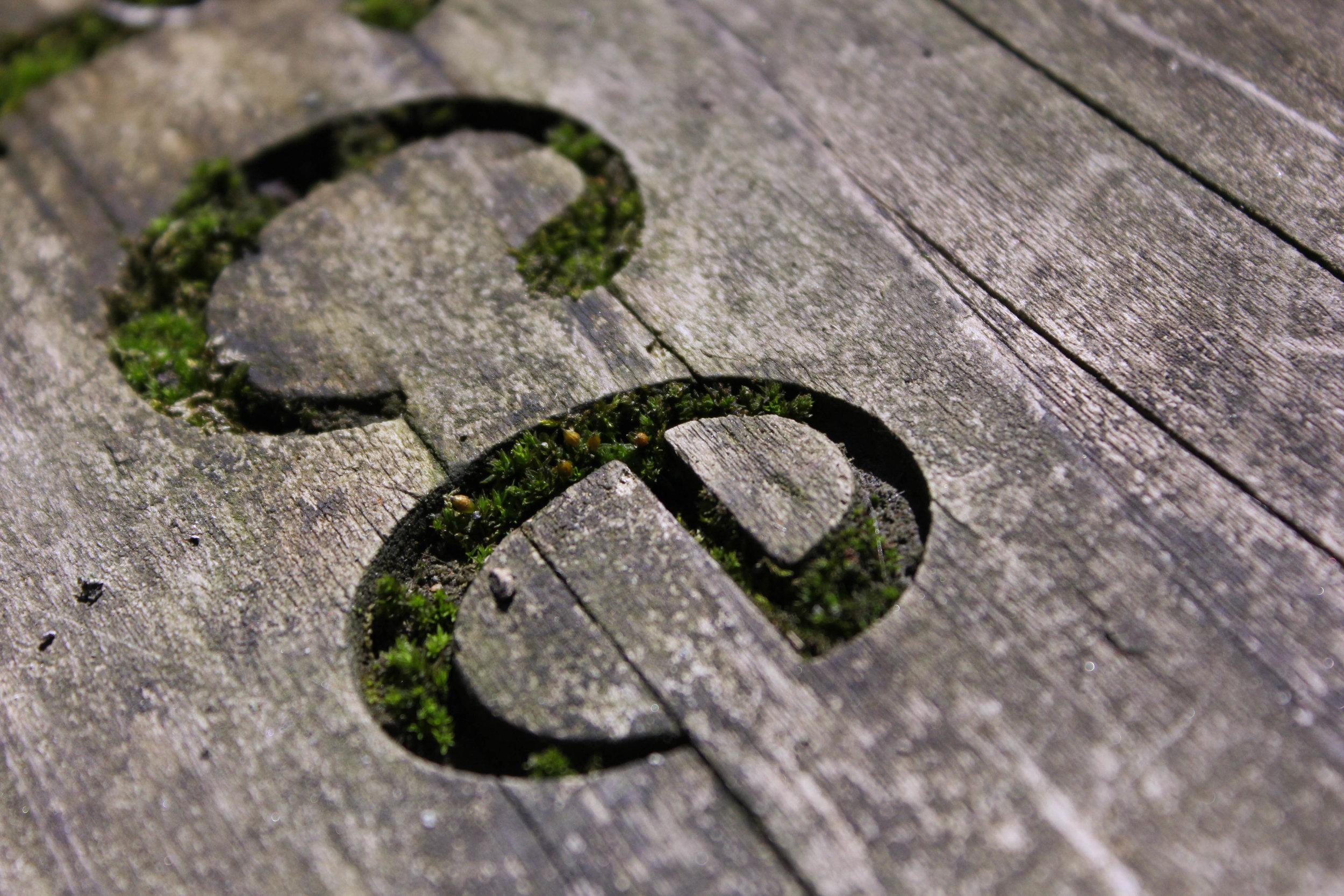eco-typography