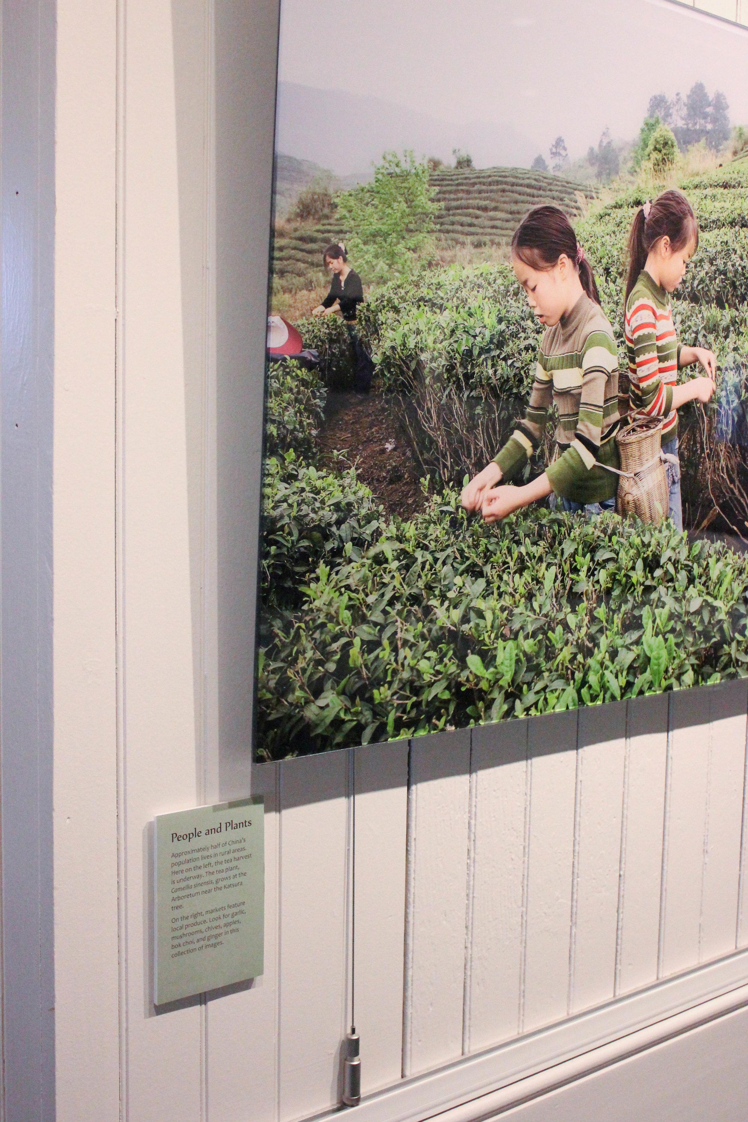 people and plants 2-9902.jpg