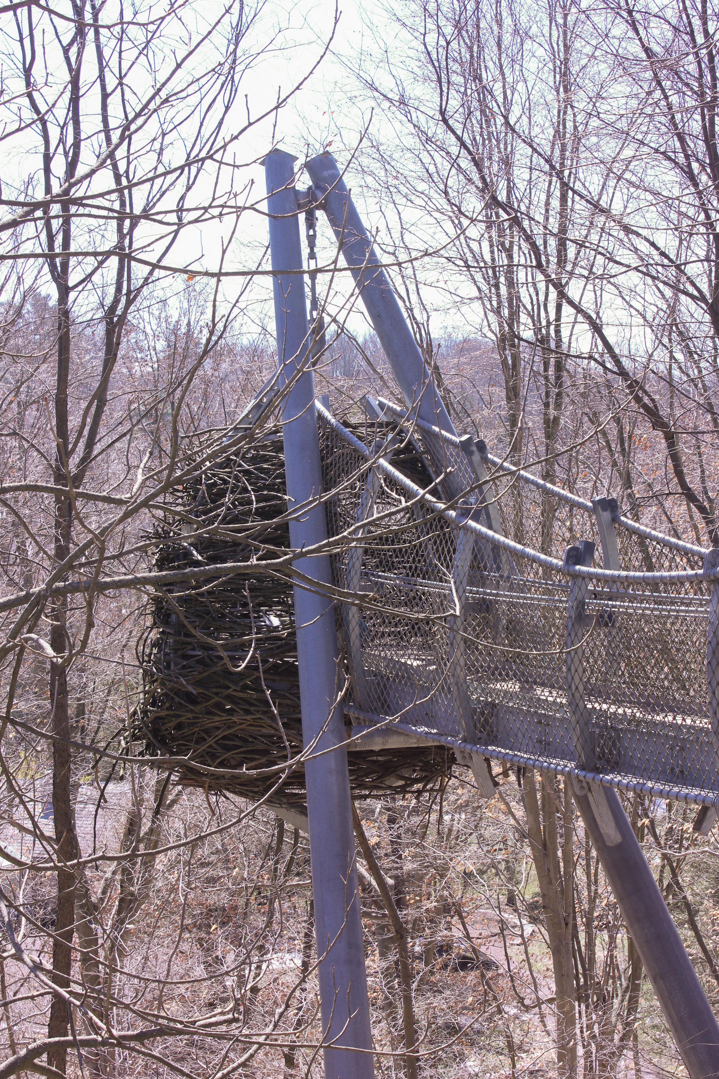 birds nest -0138.jpg