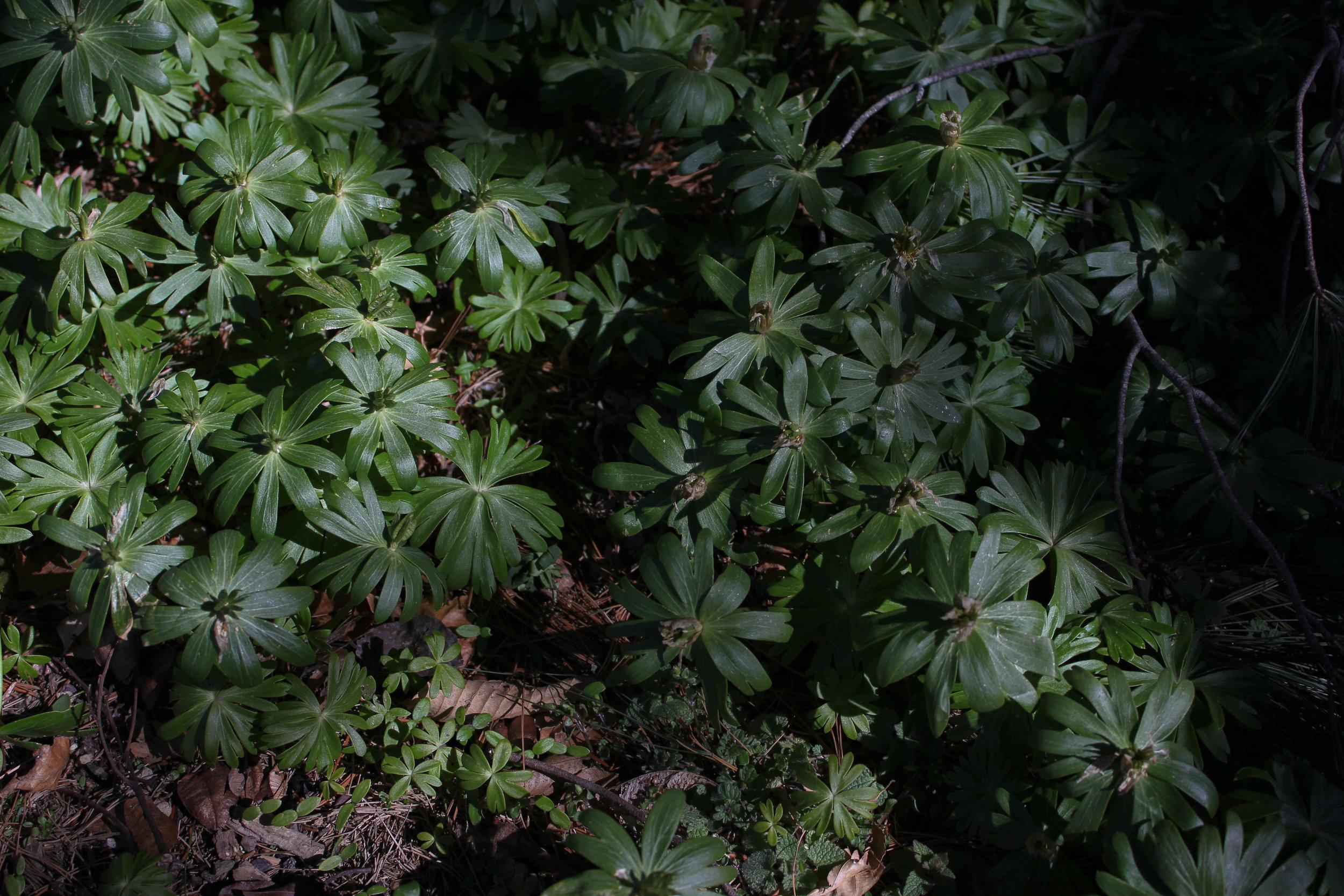 leaves and light-9615.jpg