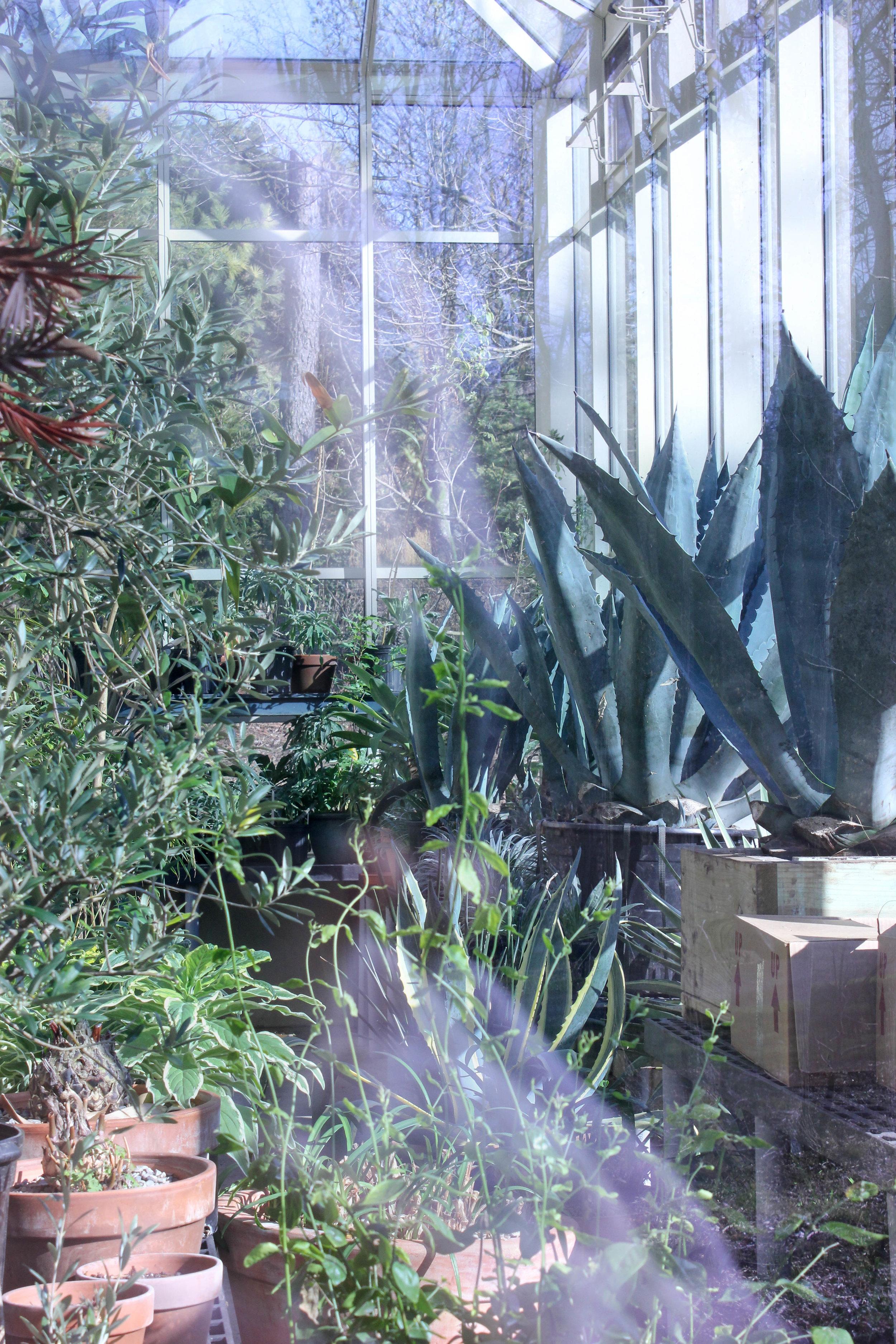 plants-0837.jpg