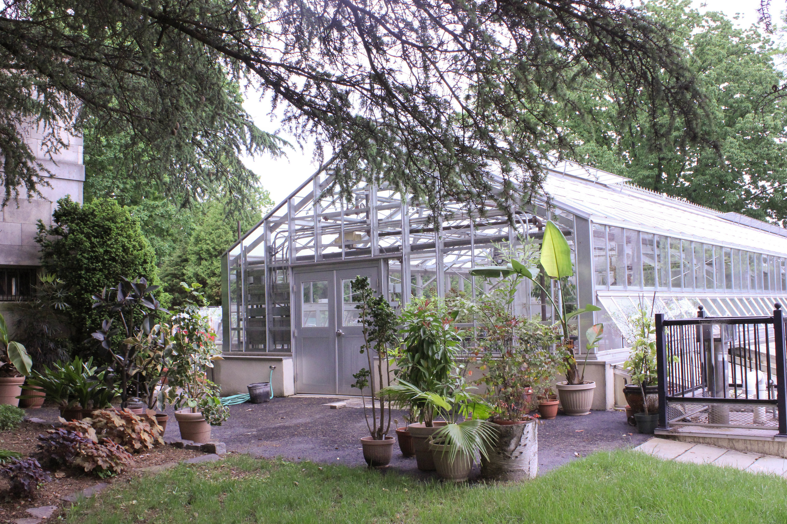 greenhouse with plants-3197.jpg