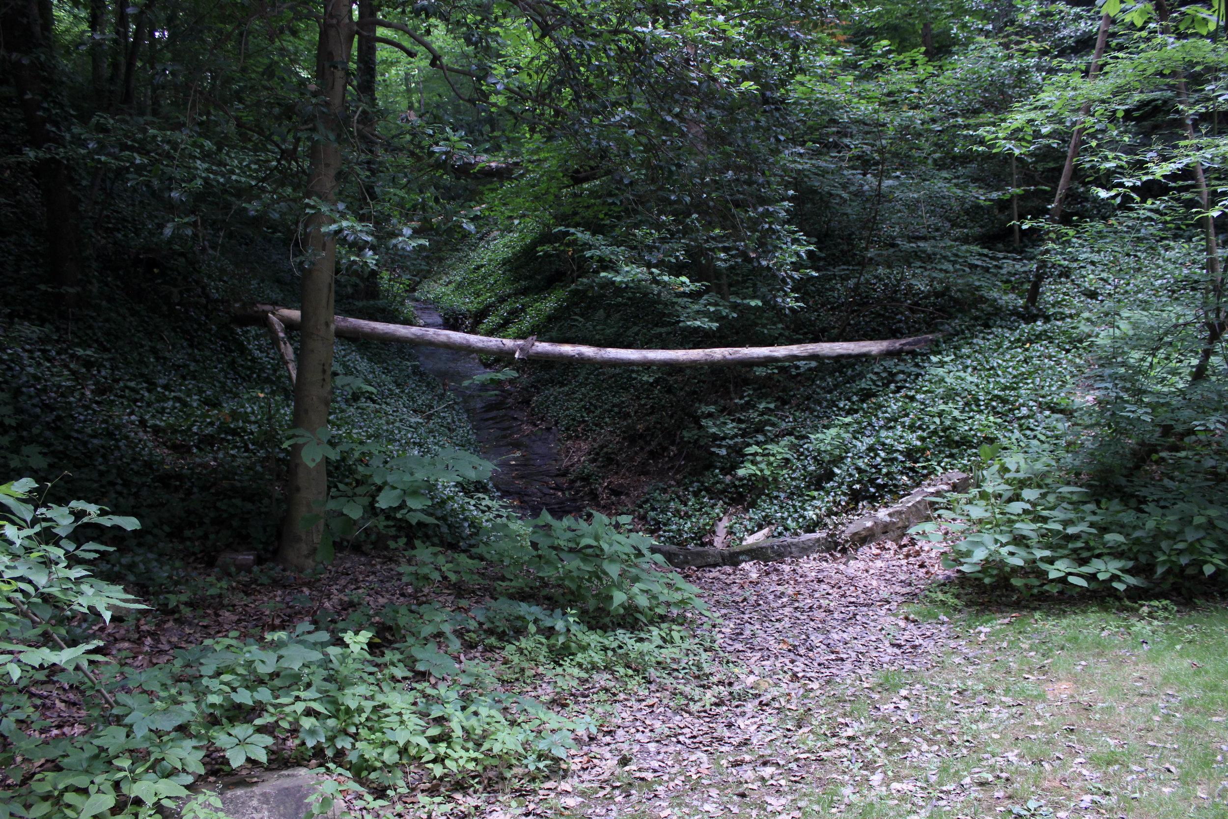 wood log-4319.jpg