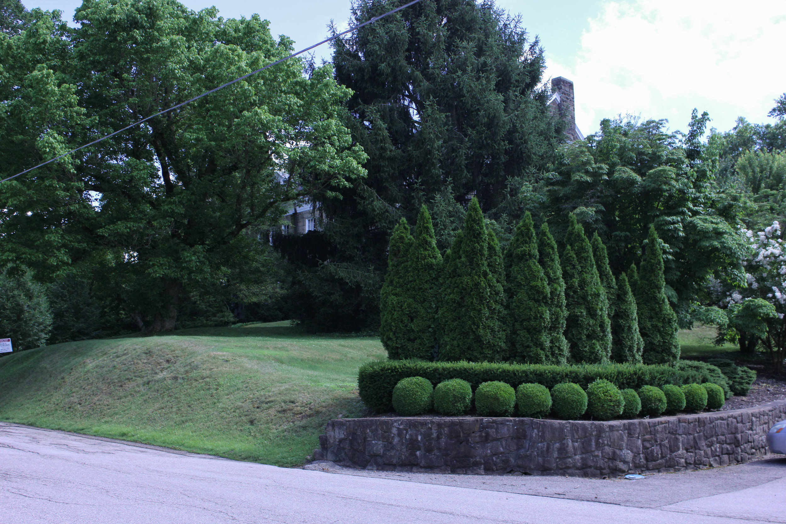 trees-5032.jpg