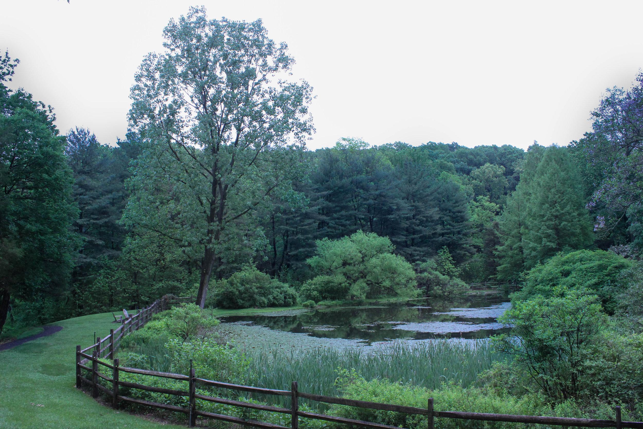 meadow-3409.jpg
