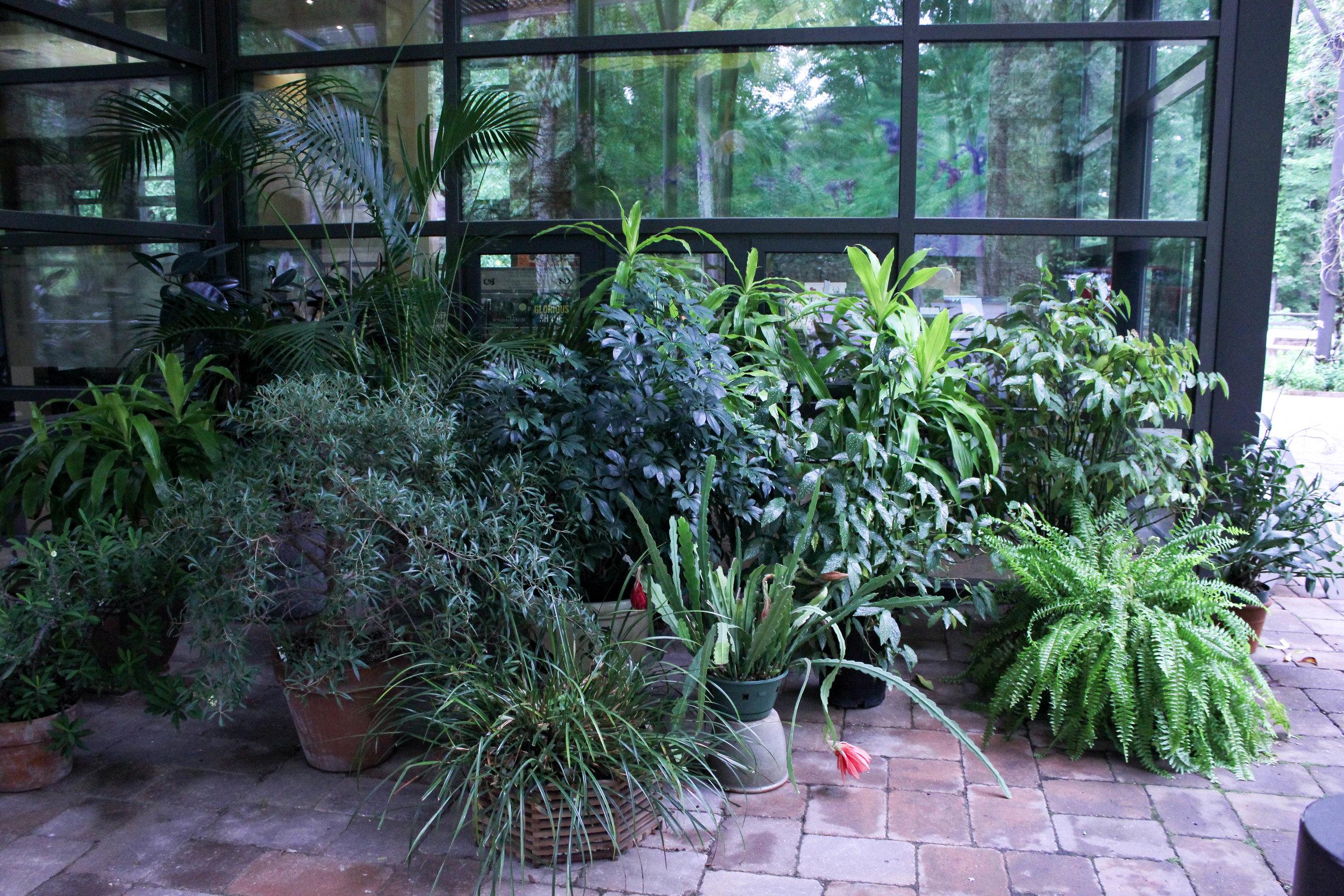 plants more-3520.jpg