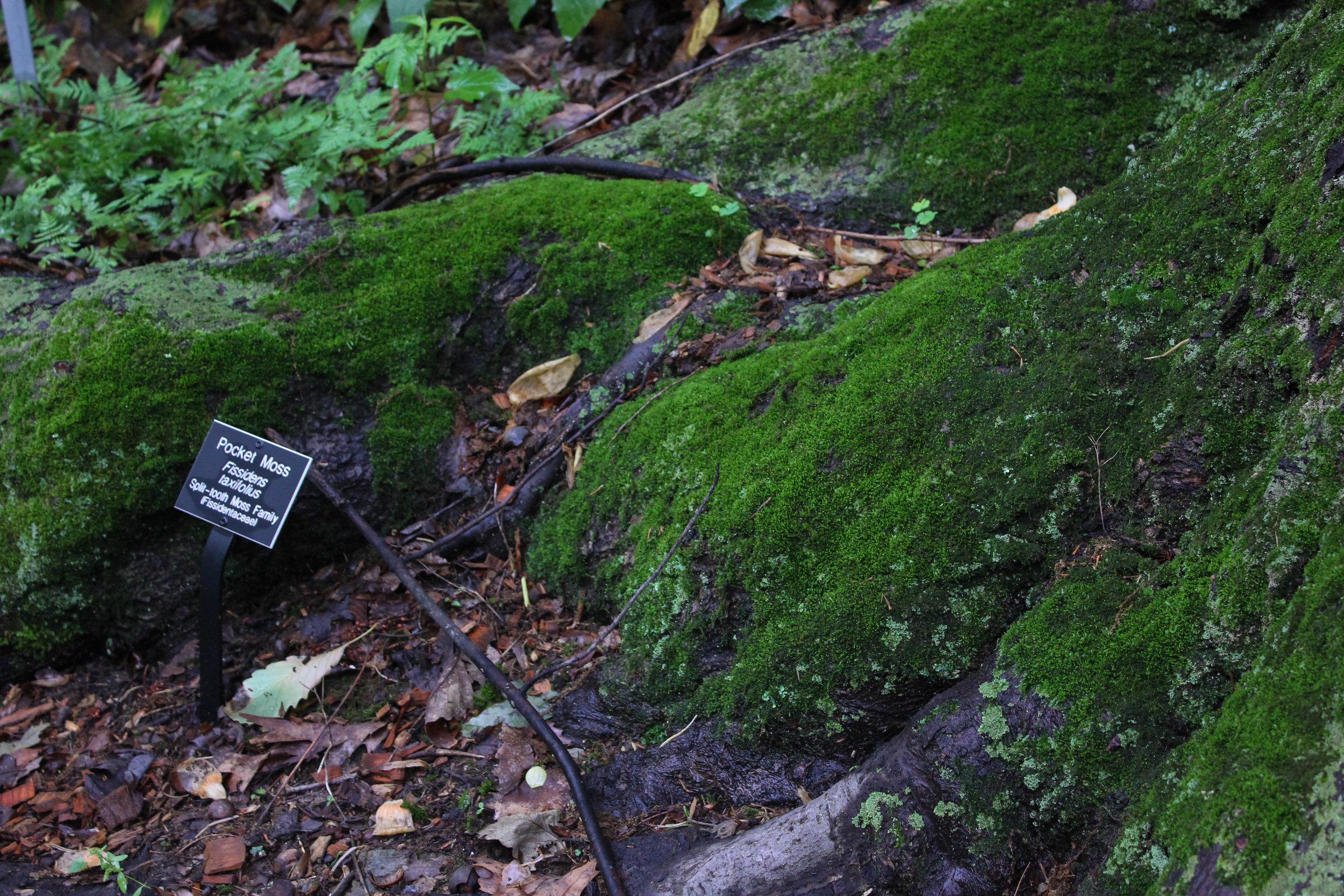 pocket moss-3443.jpg
