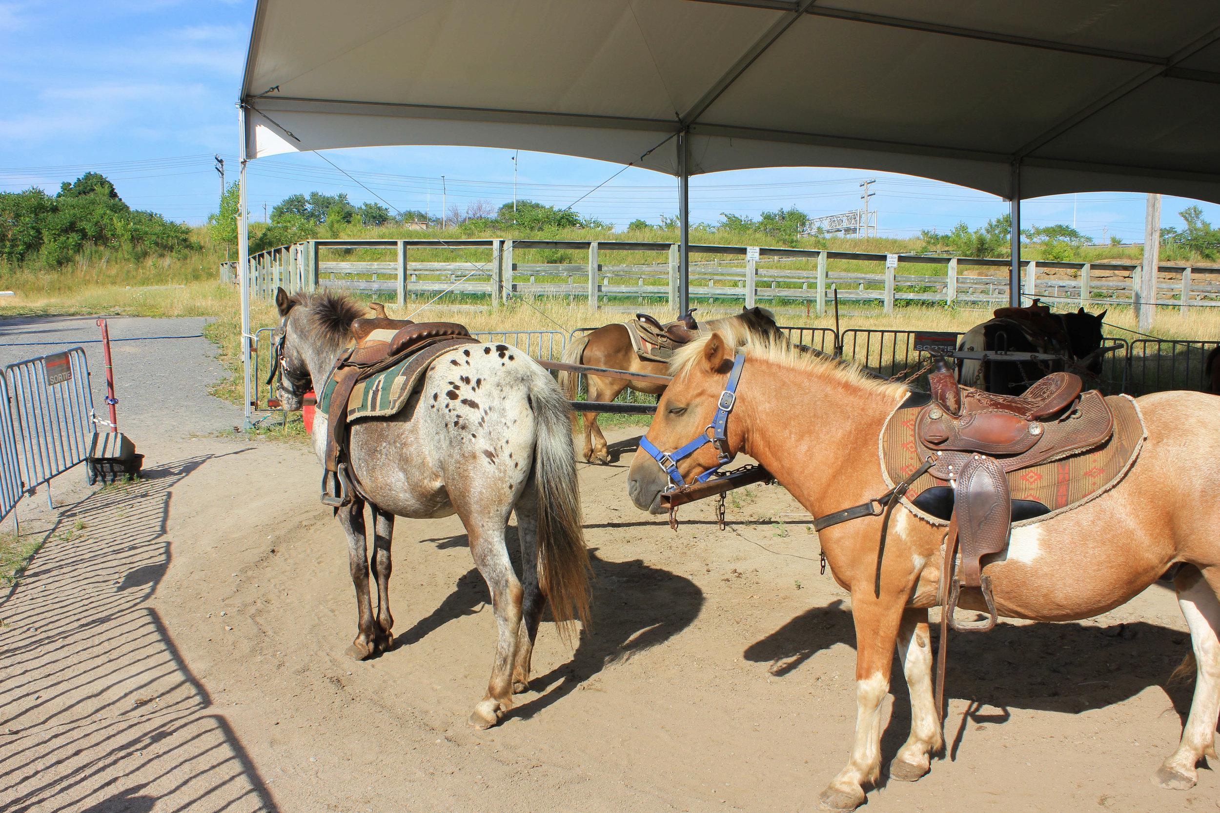 horses-5899.jpg