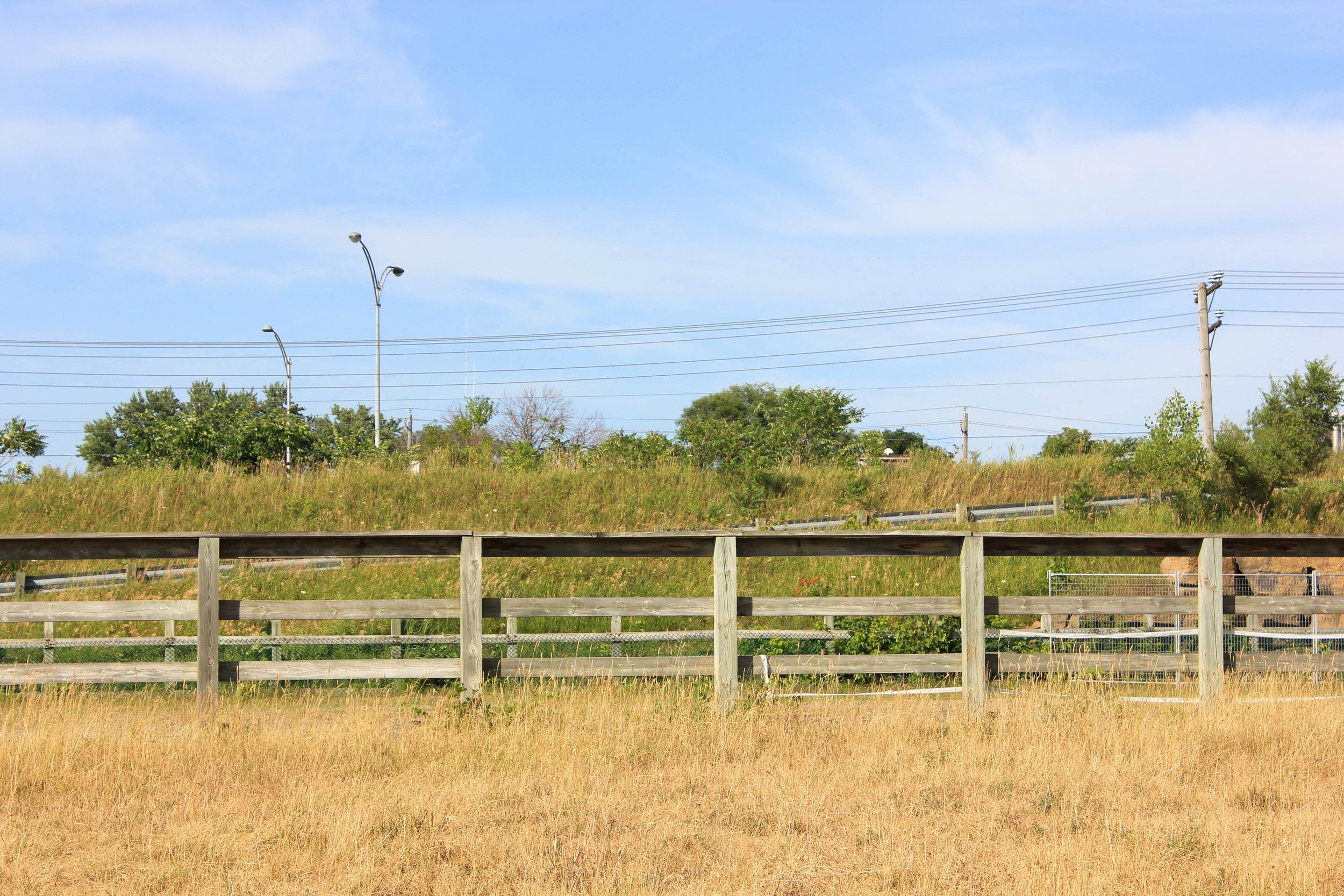 farm-5892.jpg