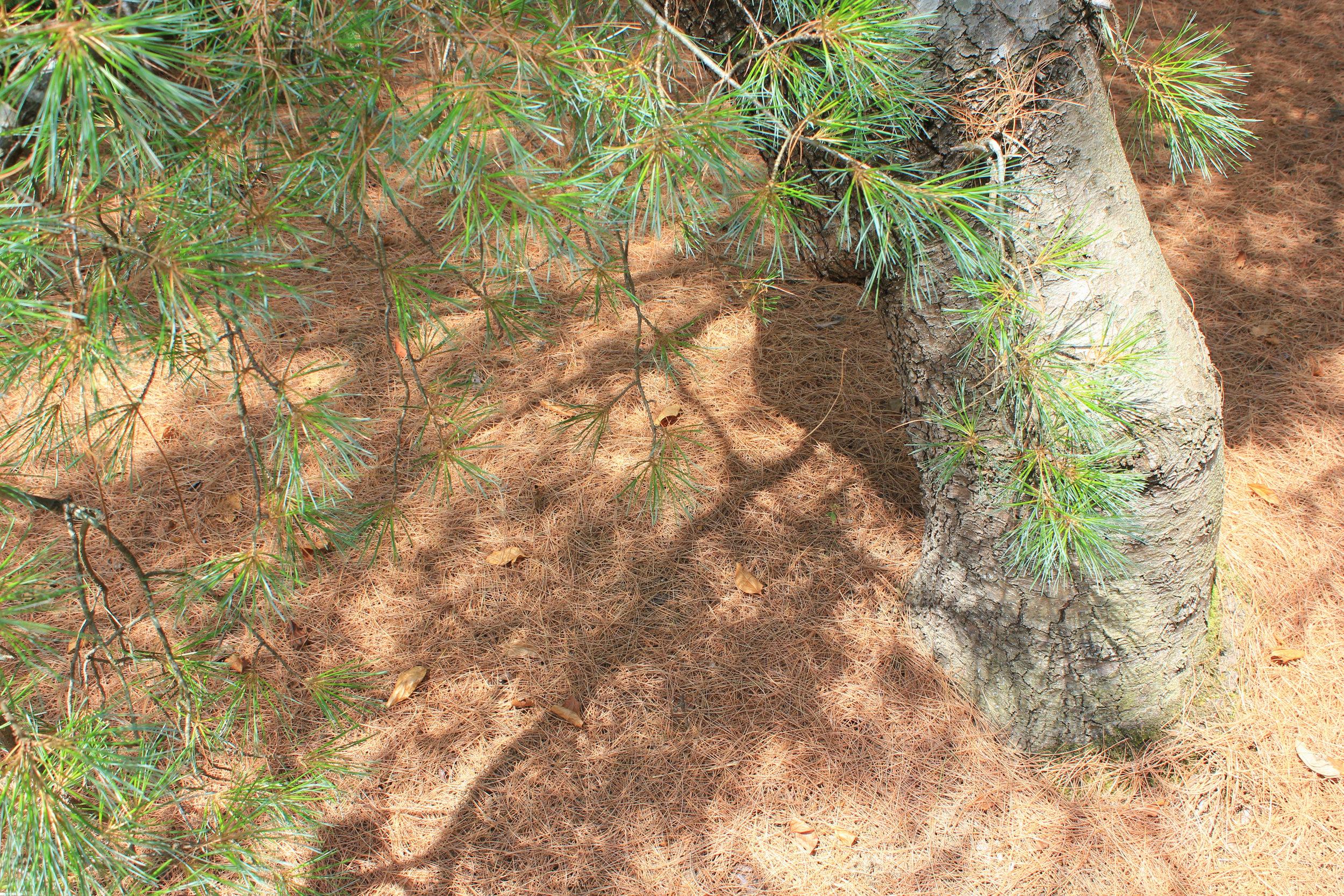 patterns-shadows-4818.jpg