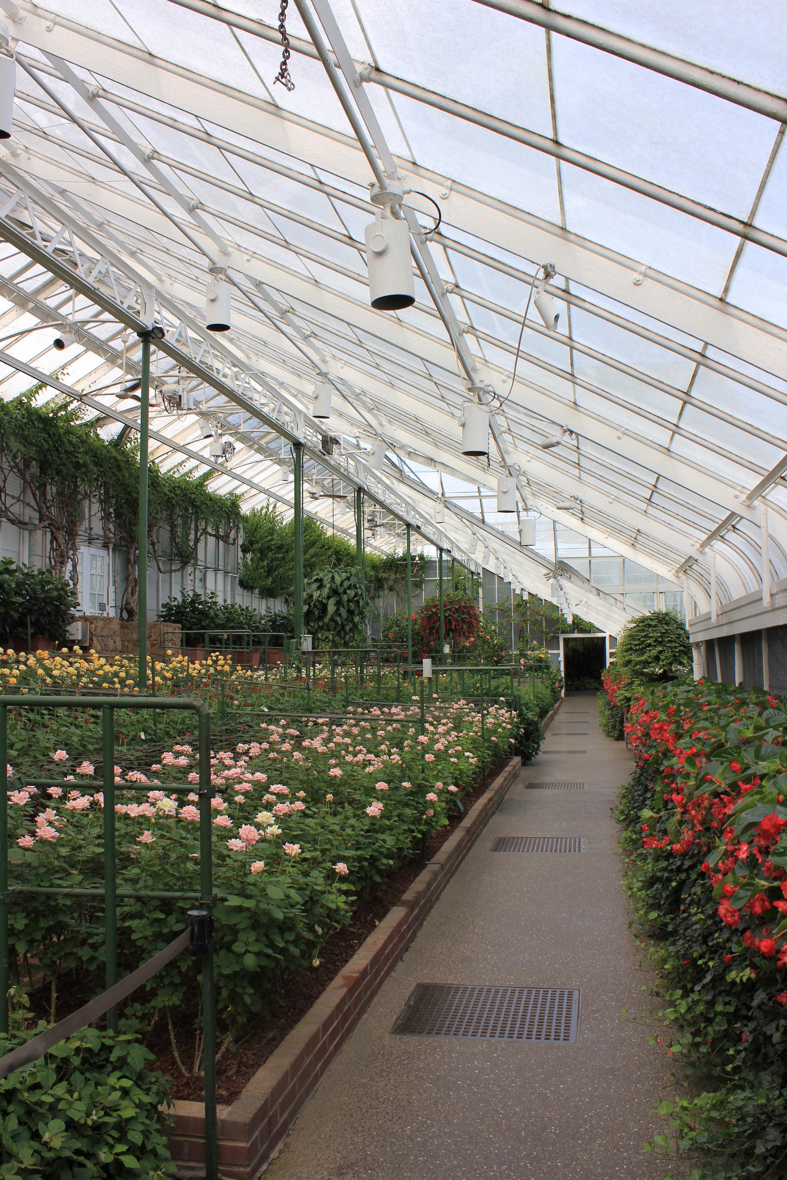rose garden-7115.jpg