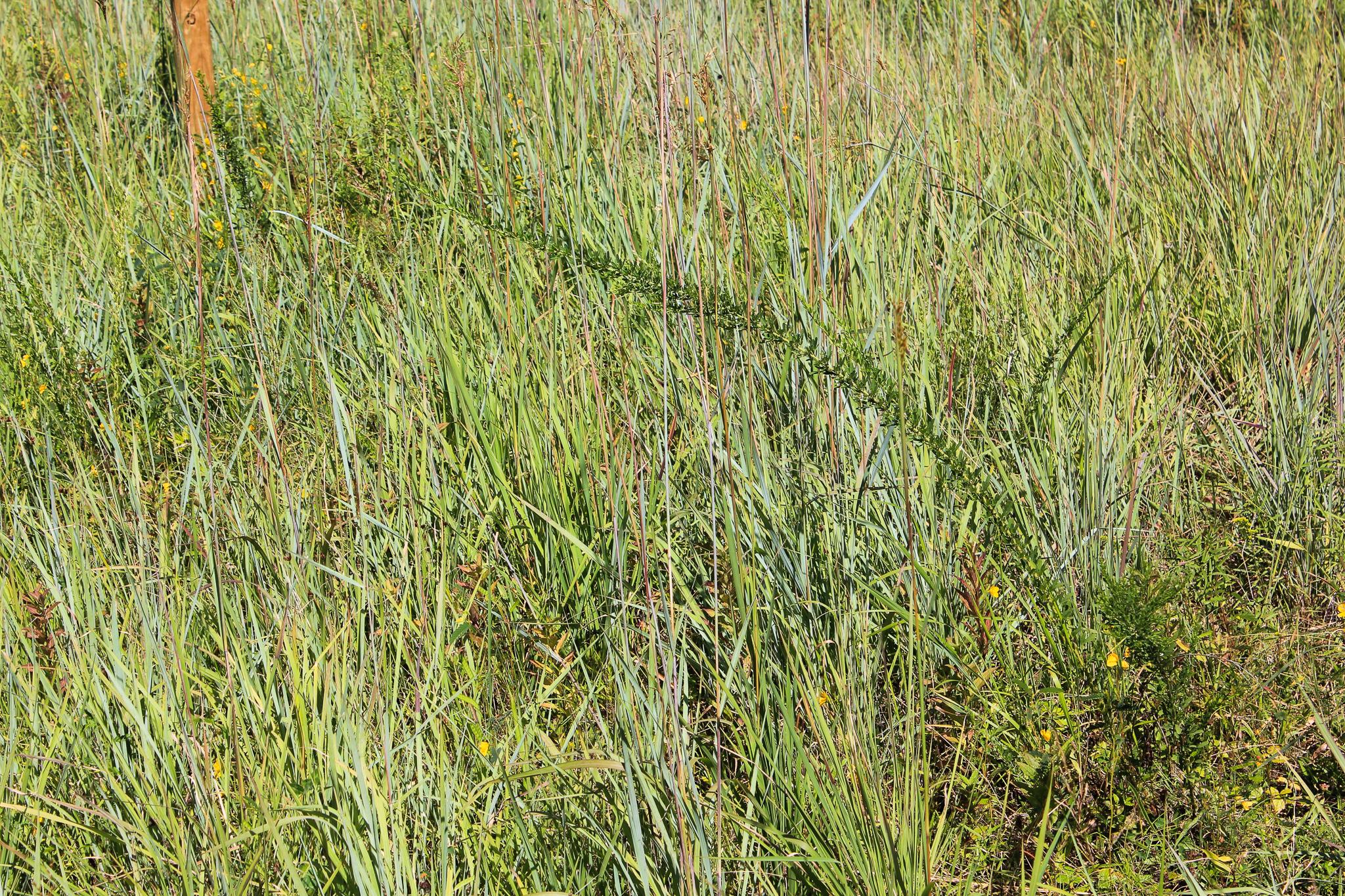 Grass_land.jpg