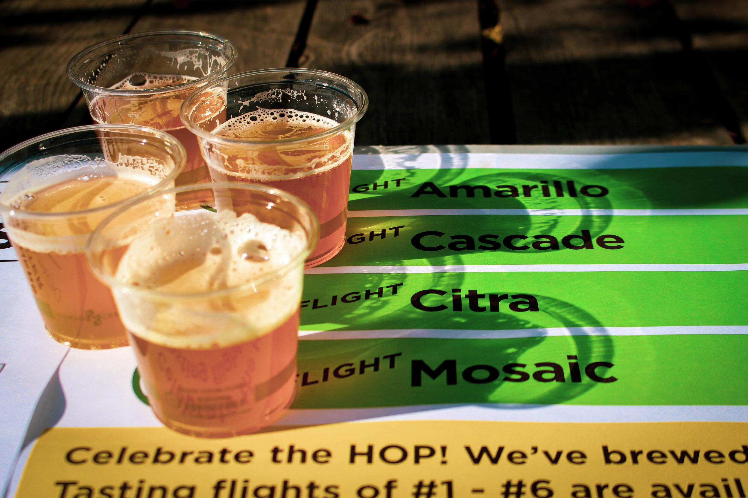 fresh hop tasters.jpg