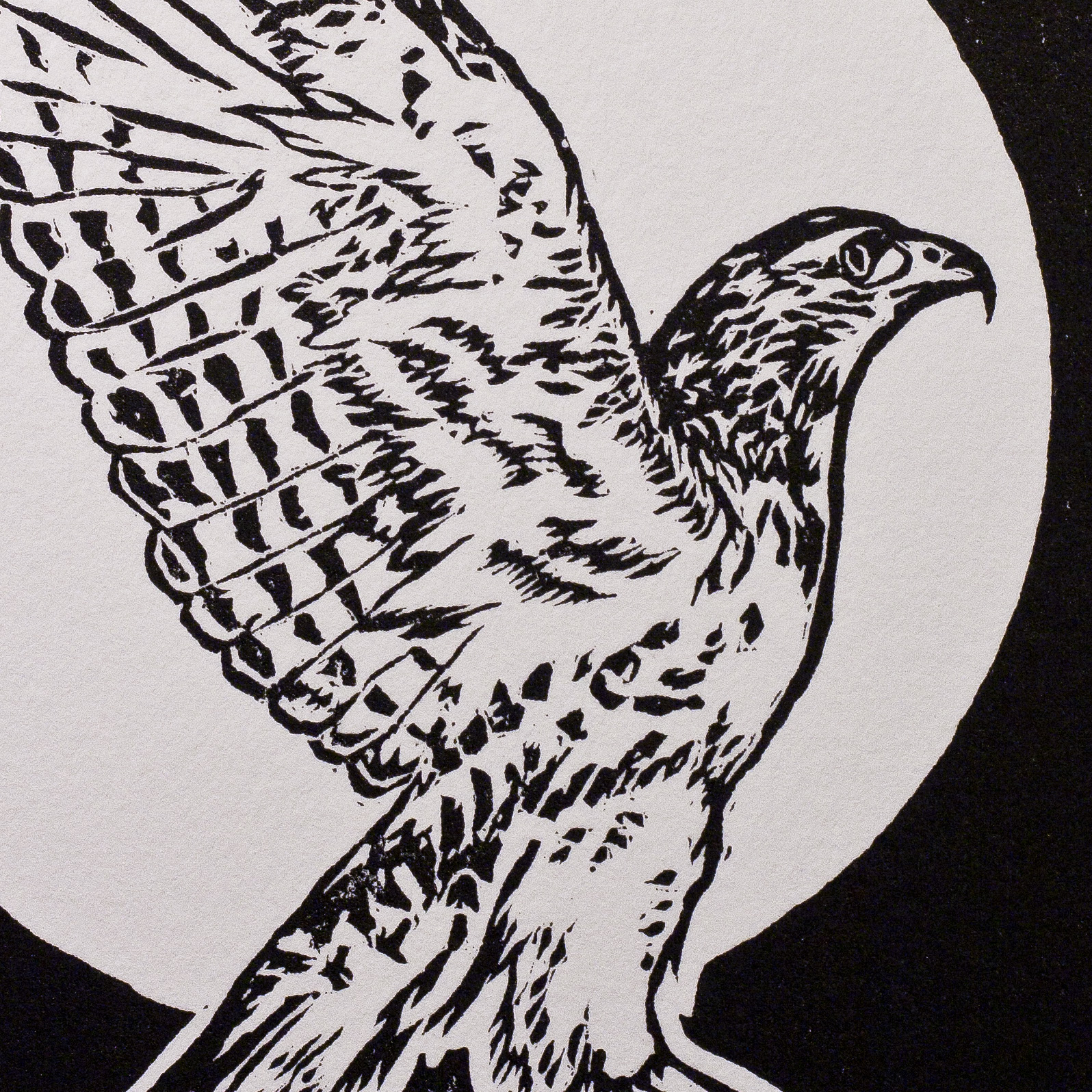 Red Tailed woodcut close-up