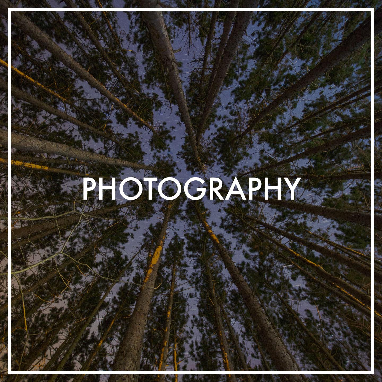 night-long-exposure-trees-pine-stars.jpg