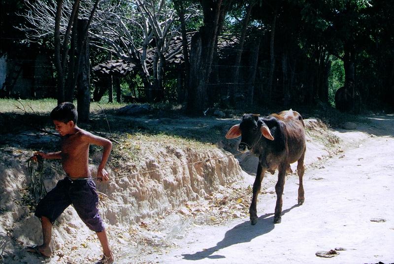 8-Little boy & baby cow 12-8-05.jpg