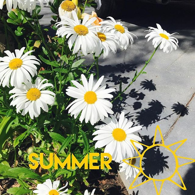 🌼 have a wonderful wednesday 🌼 . . . #flowerstagram #flowers #summerday #summerblooms #sunshineyday #losangeles #lalife #actorslife #outandabout #walksinlosangeles #beverlyhills #madewithover