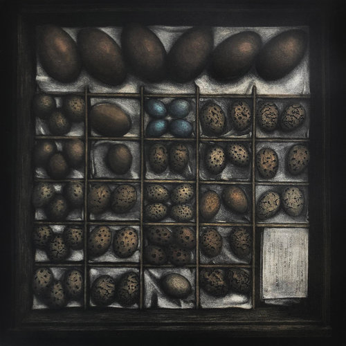 Angus Fisher,  Collection Tray No.23  multi-plate intaglio etching, 2019