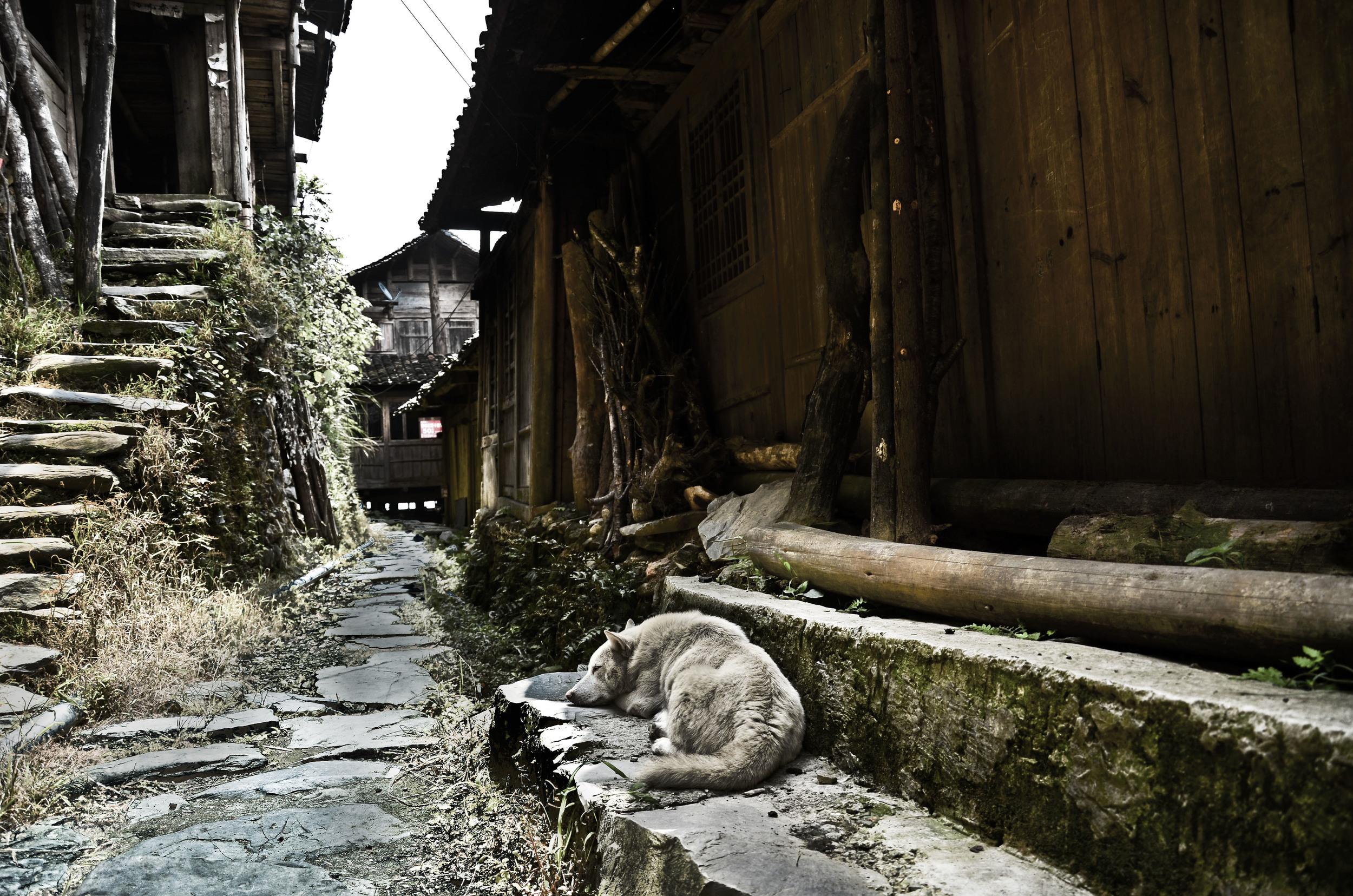 Dog Sleeping on step - alley